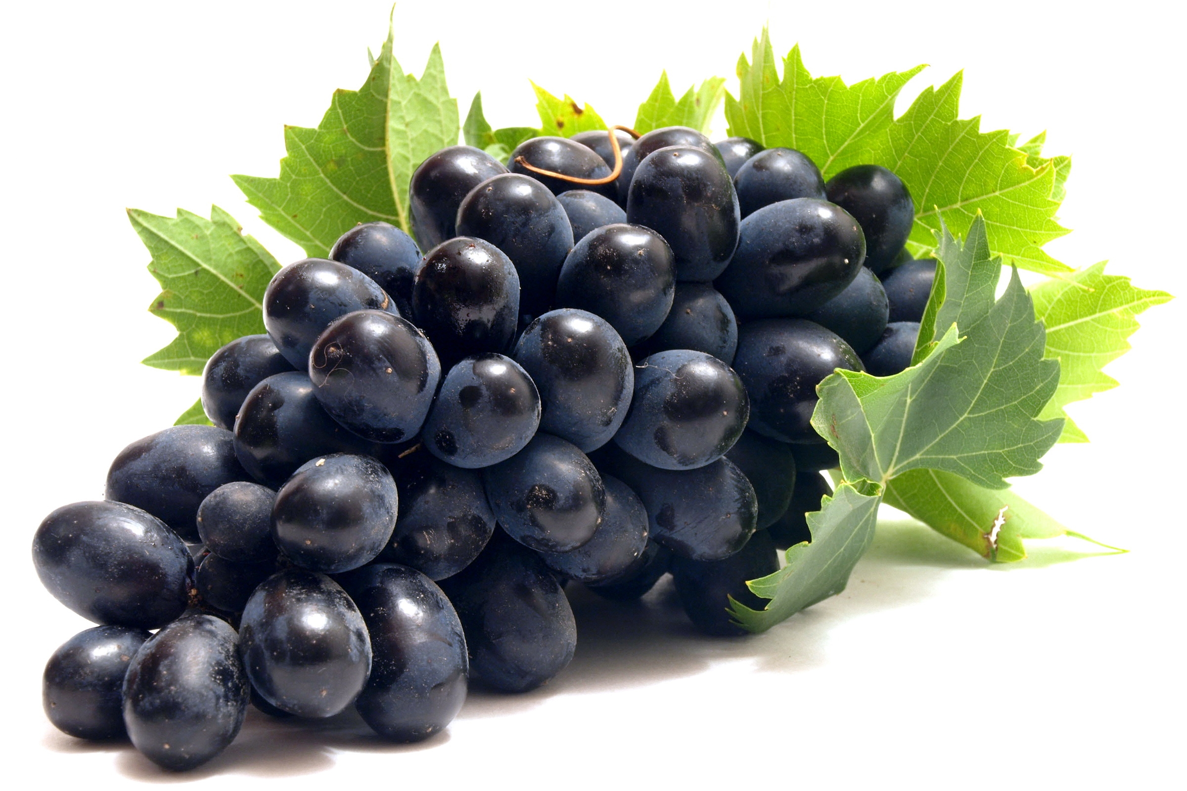 black grapes hd wallpaper