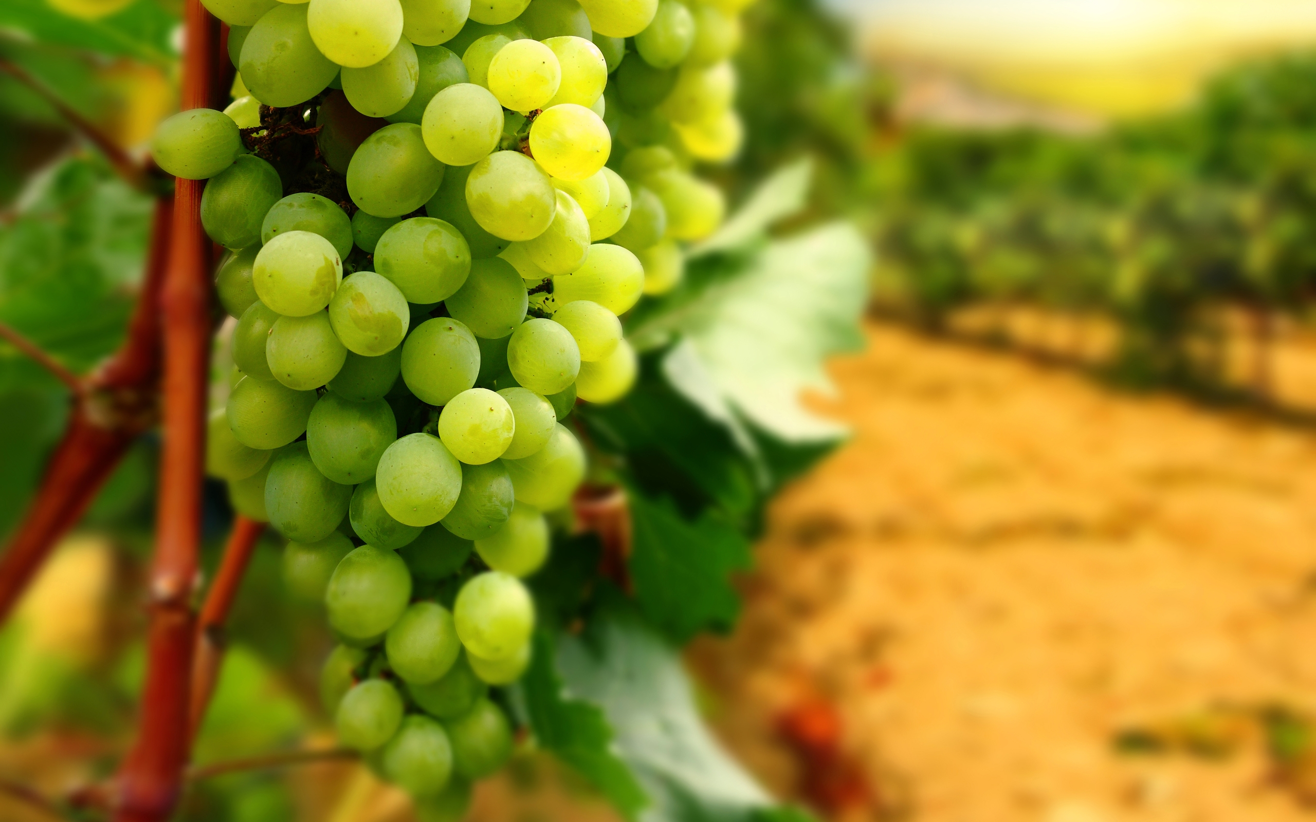 Fruits hd images - Green Grapes Hd Wallpaper