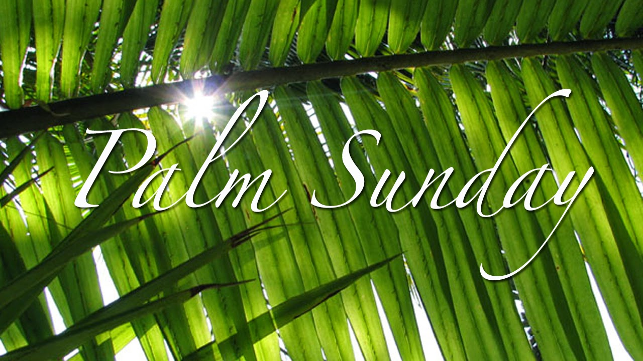 happy palm sunday greetings wishes hosanna wallpaper