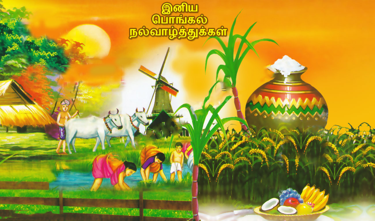Happy pongal festival tamil wishes greetings hd desktop wallpaper m4hsunfo