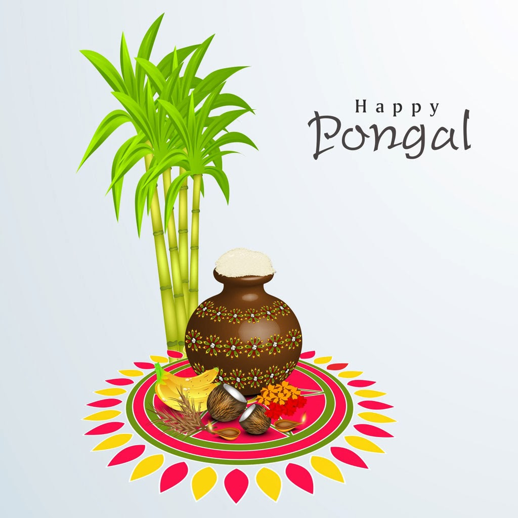 happy pongal festival wishes greetings latest hd background wallpaper