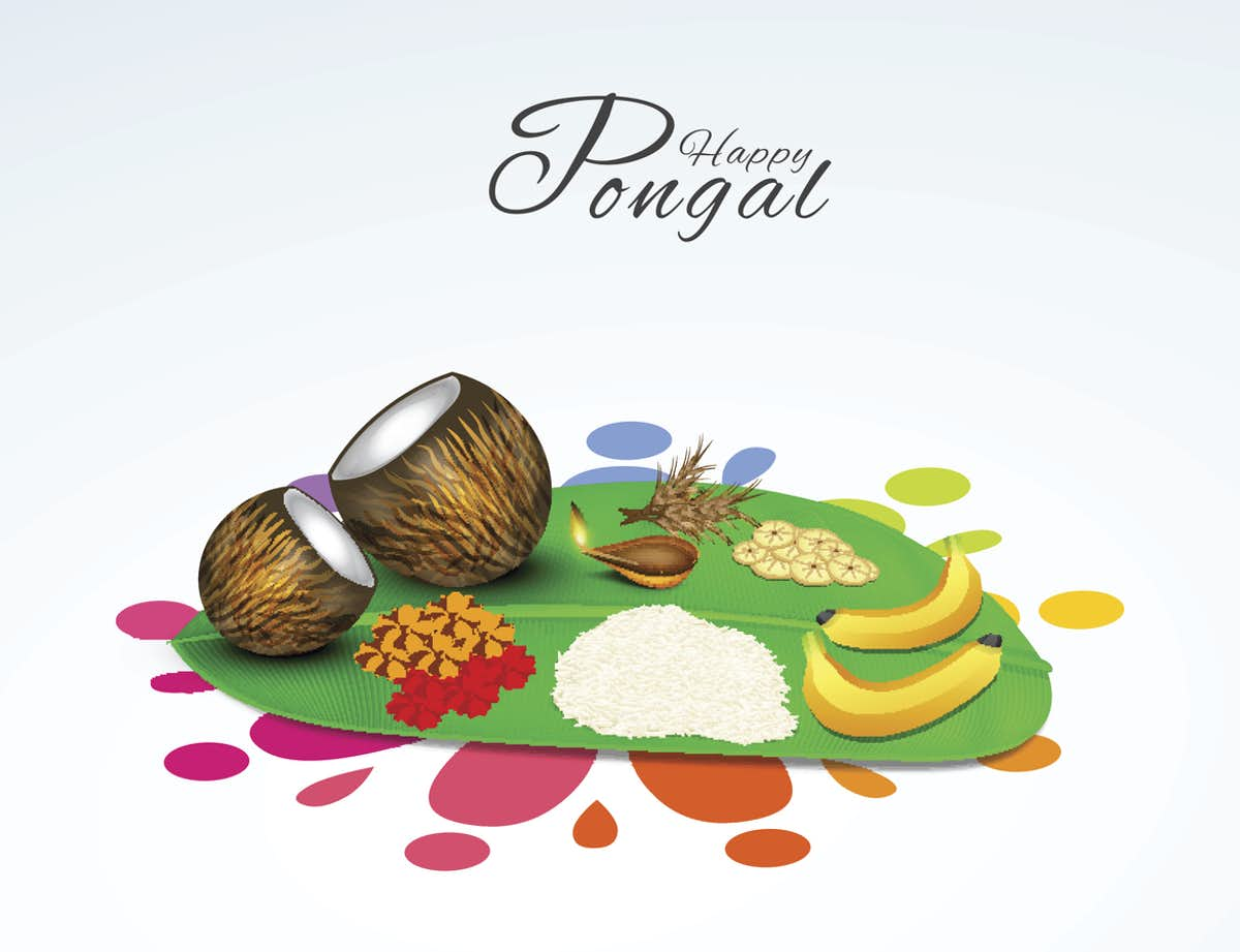 happy pongal festival wishes greetings new hd background wallpaper