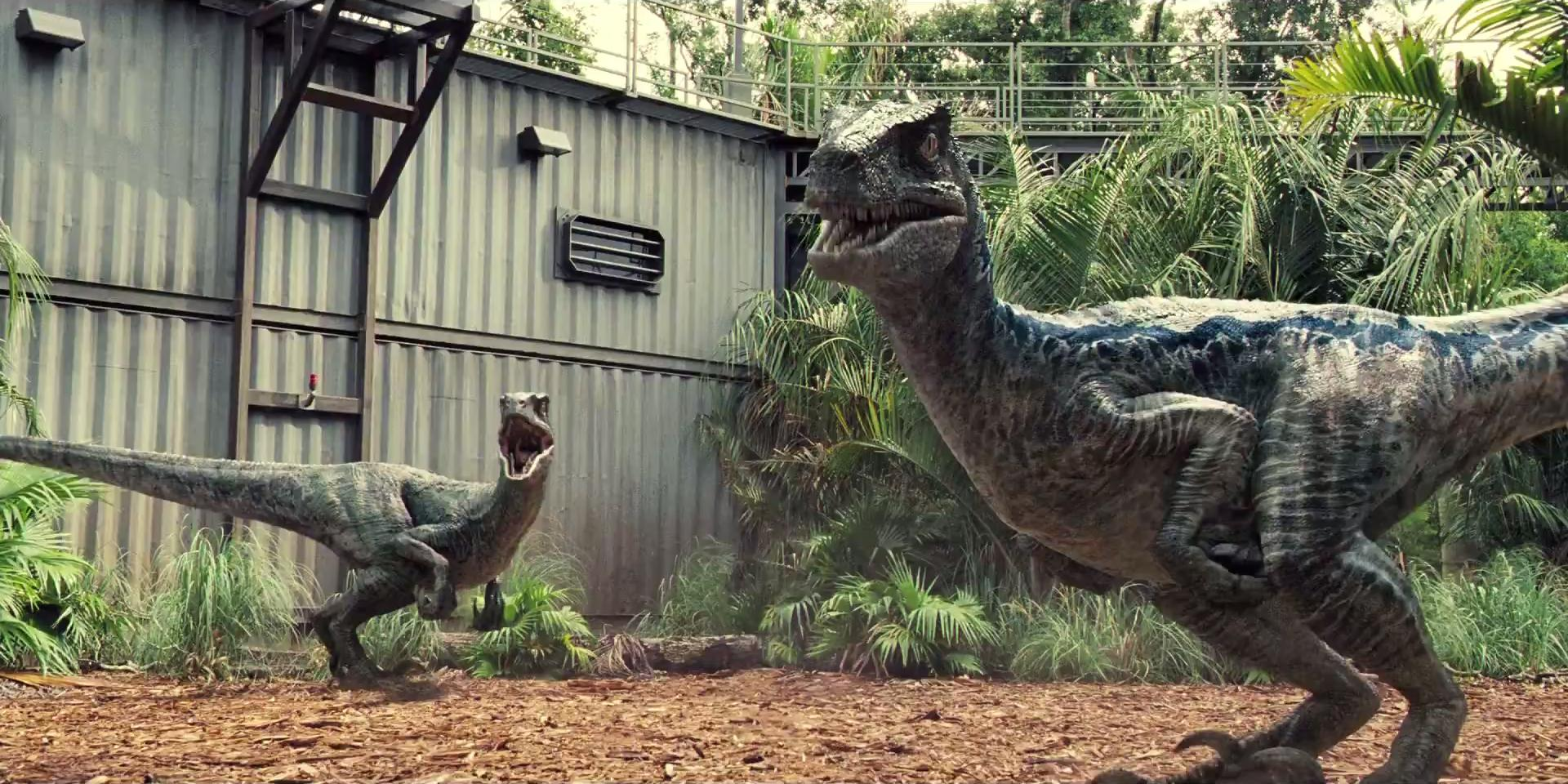 Jurassic World Fallen Kingdom Blue Velociraptor Hd Wallpaper