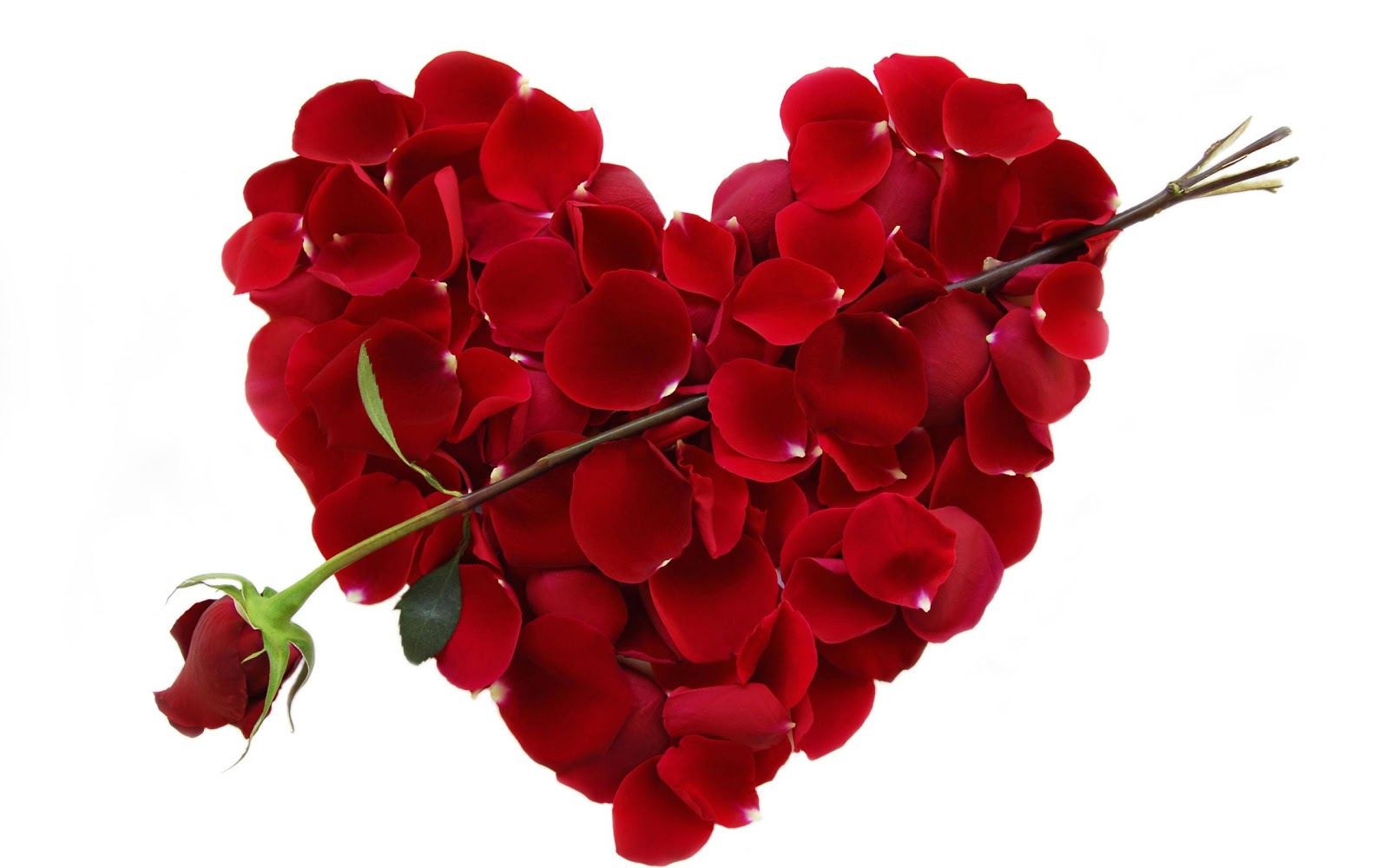happy valentines day love rose petals heart hd wallpaper