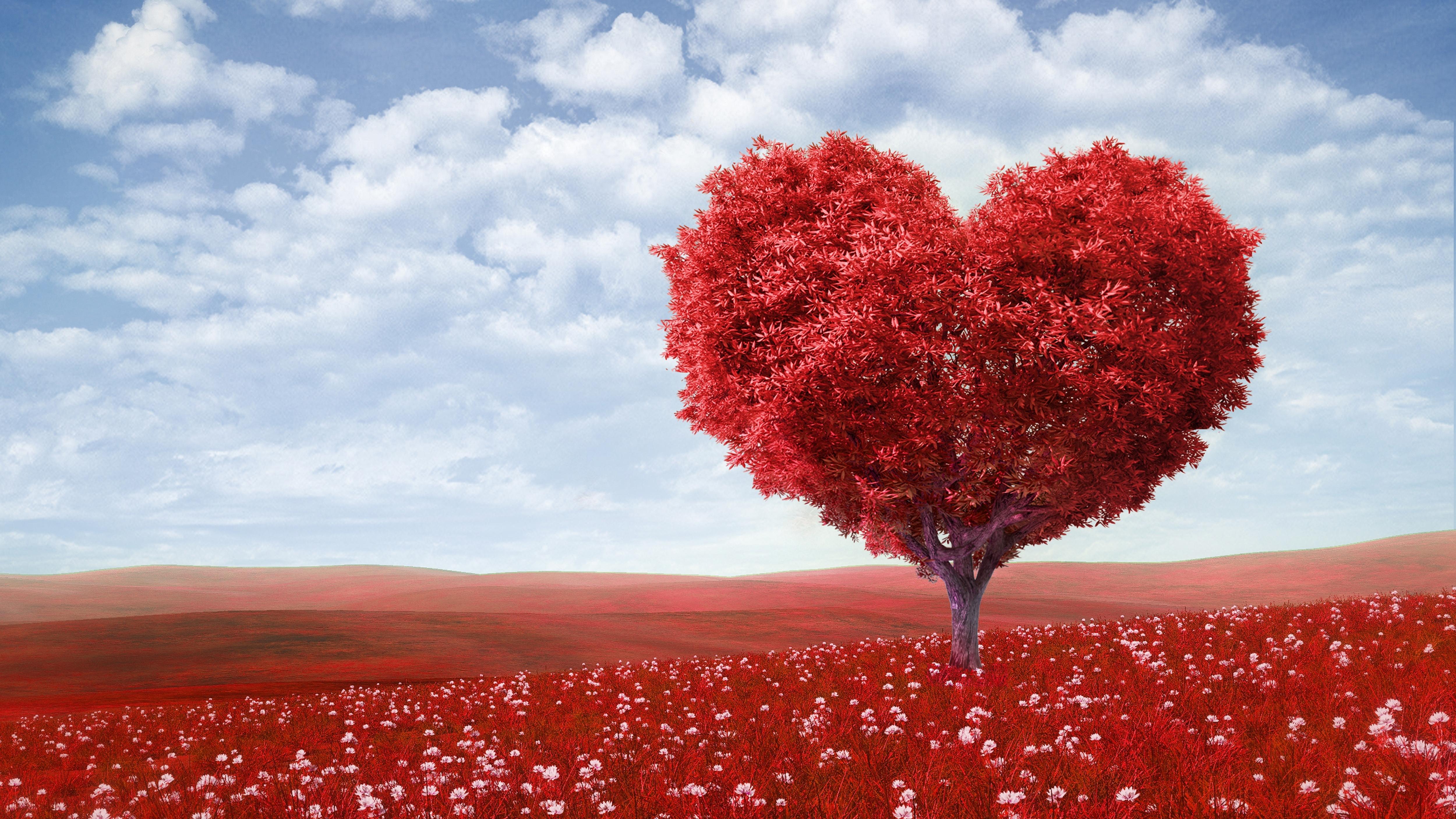 love romance heart tree field flowers sky clouds free hd wallpaper