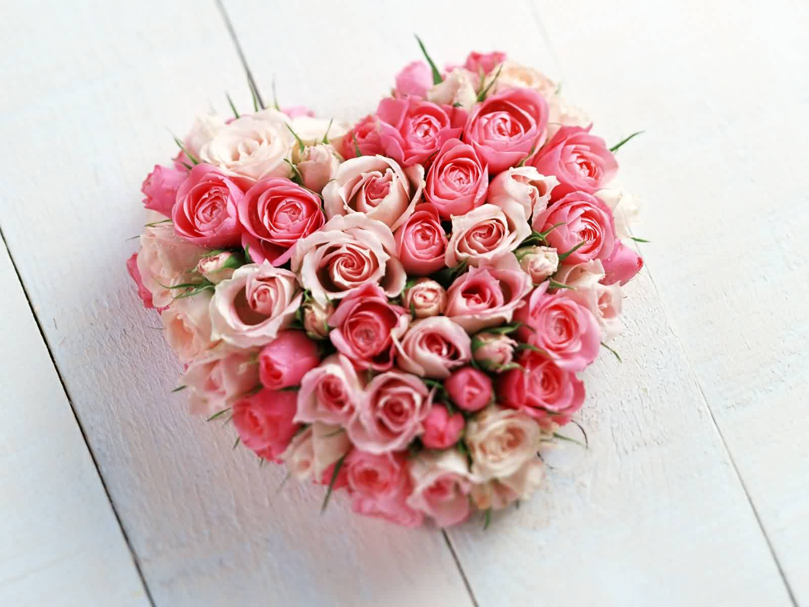 valentines day cape cod rose bunch hd wallpaper