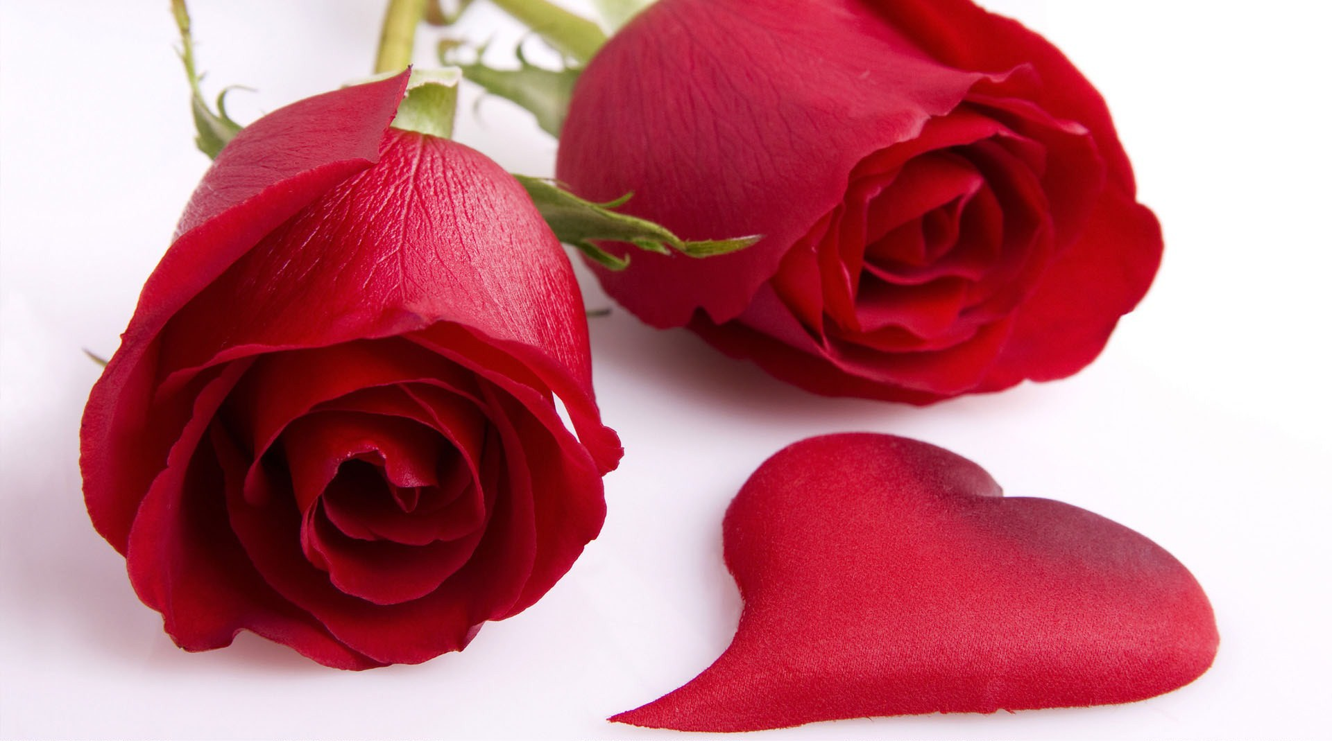 valentines day rose petals wallpaper free hd desktop