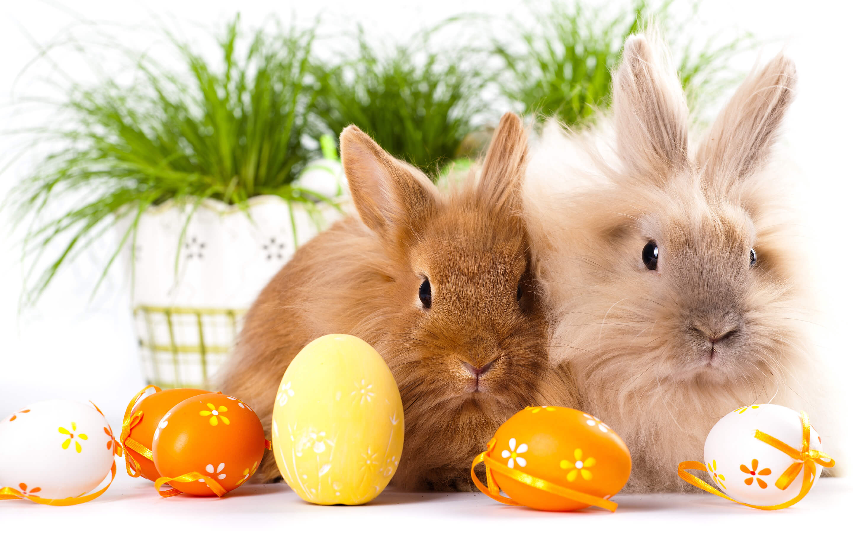 Easter Bunnies Free Hd Wallpaper Background