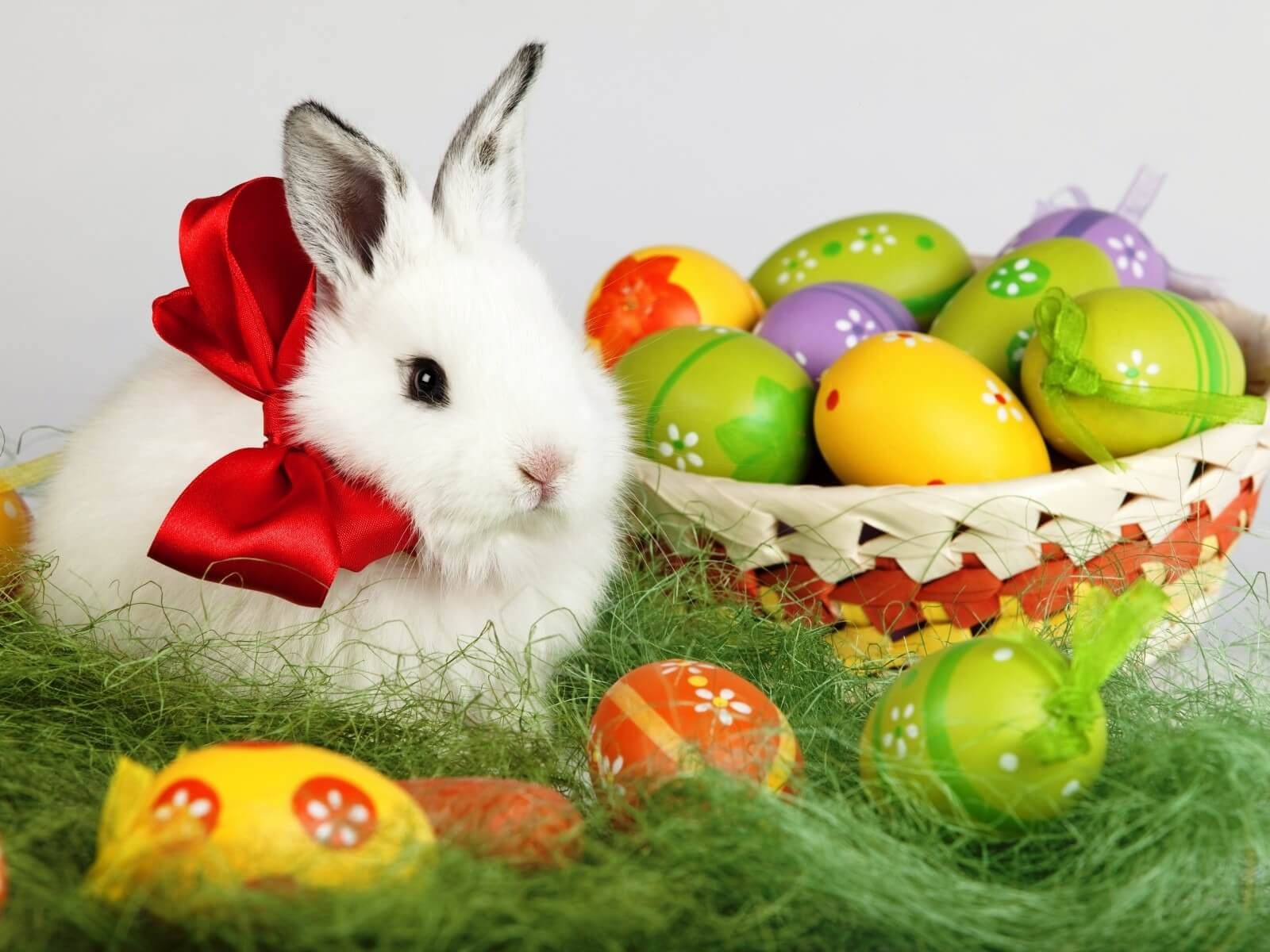 Easter Bunny Rabbit Desktop Wallpaper Free Hd
