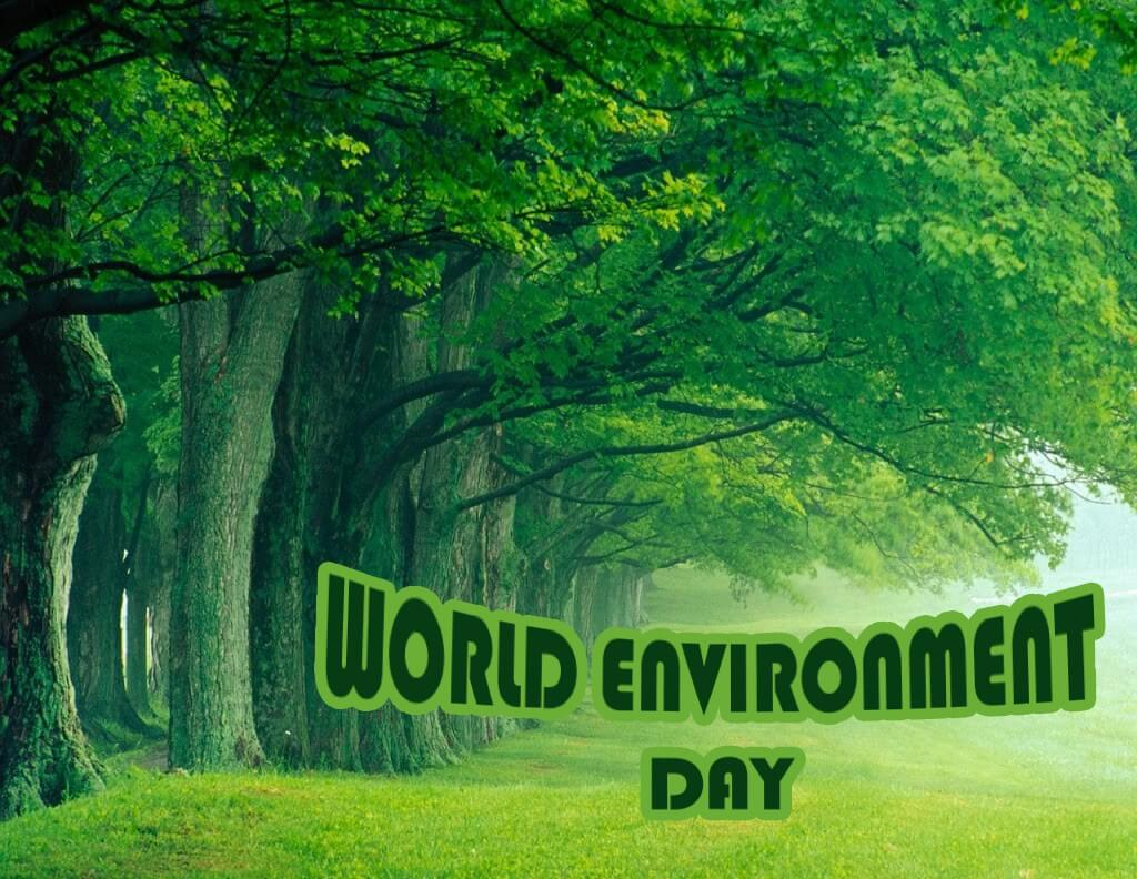 environment day save more trees forest wallpaper