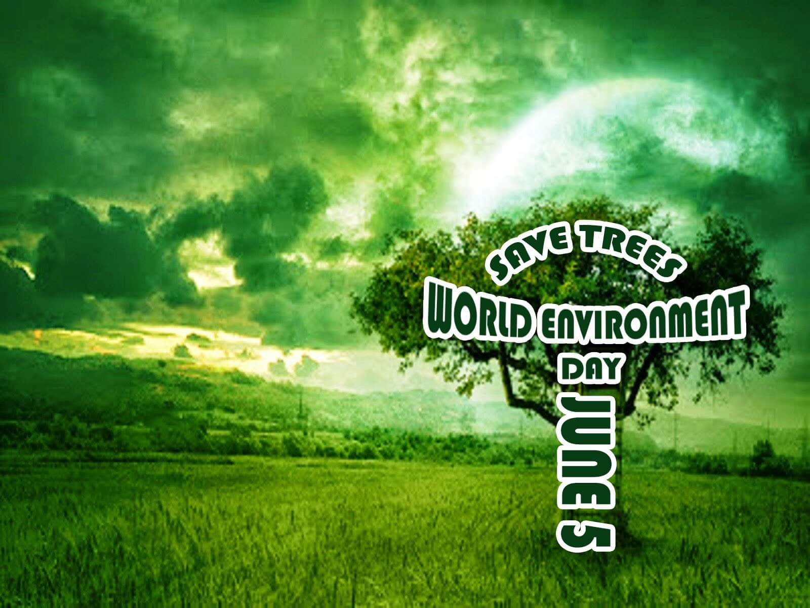 environment day save trees wallpaper