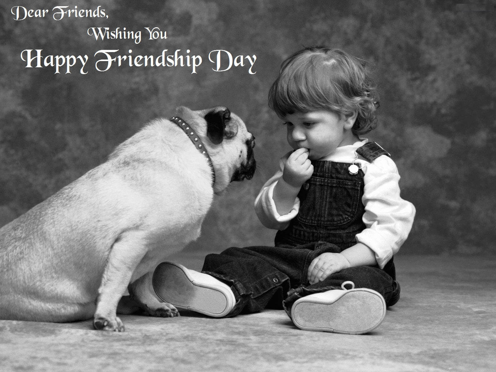 happy friendship day pug dog and boy hd wallpaper
