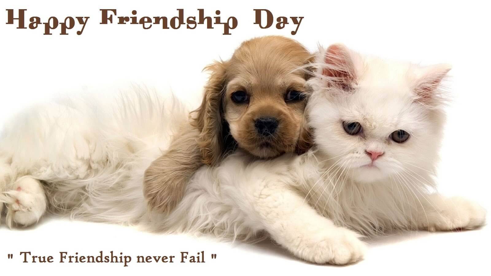 happy friendship day true friends hd wallpaper