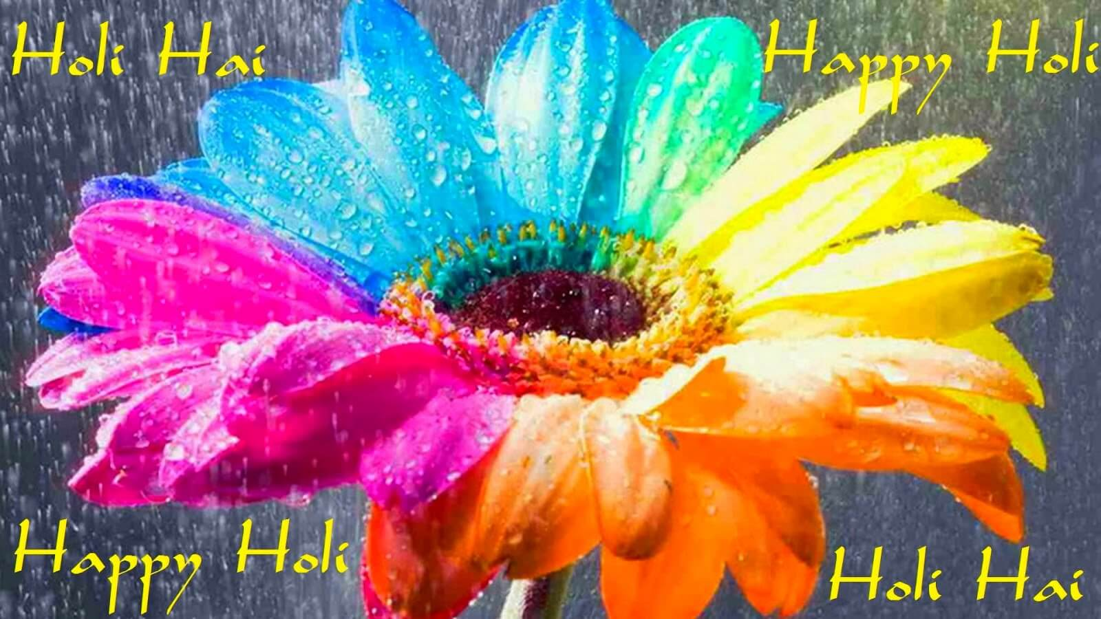 happy holi festival greetings wishes hd 3d sunflower wallpaper