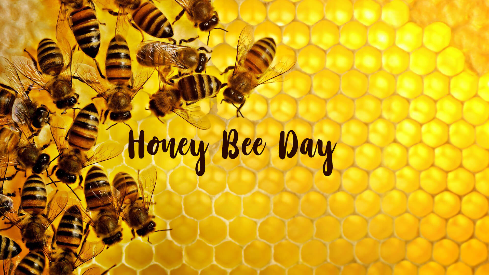 happy honey bee day hive swarm colony hd wallpaper