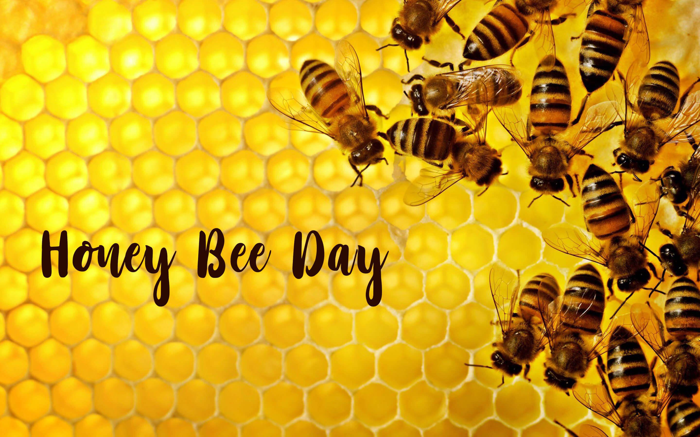 happy honey bee day image desktop 4k hd wallpaper
