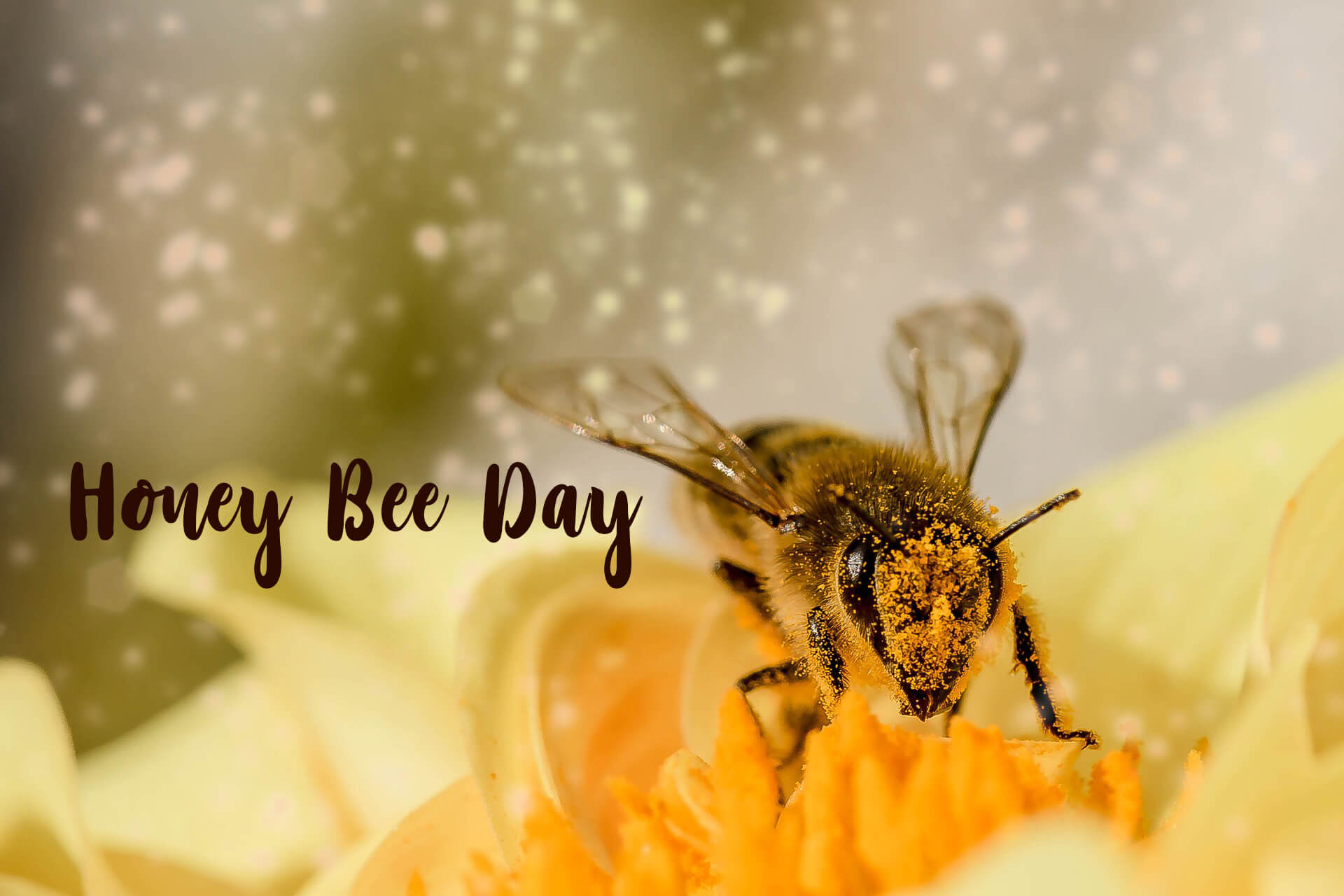 happy honey bee day image pc hd wallpaper