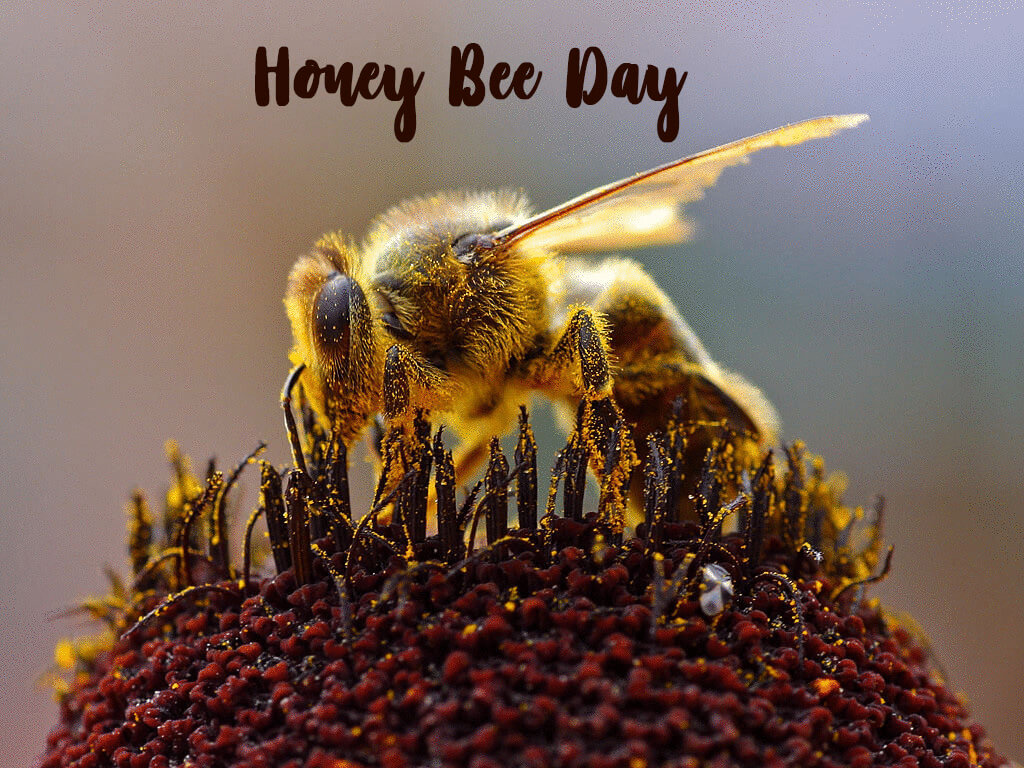 happy honey bee day sitting on pollen grains hd wallpaper