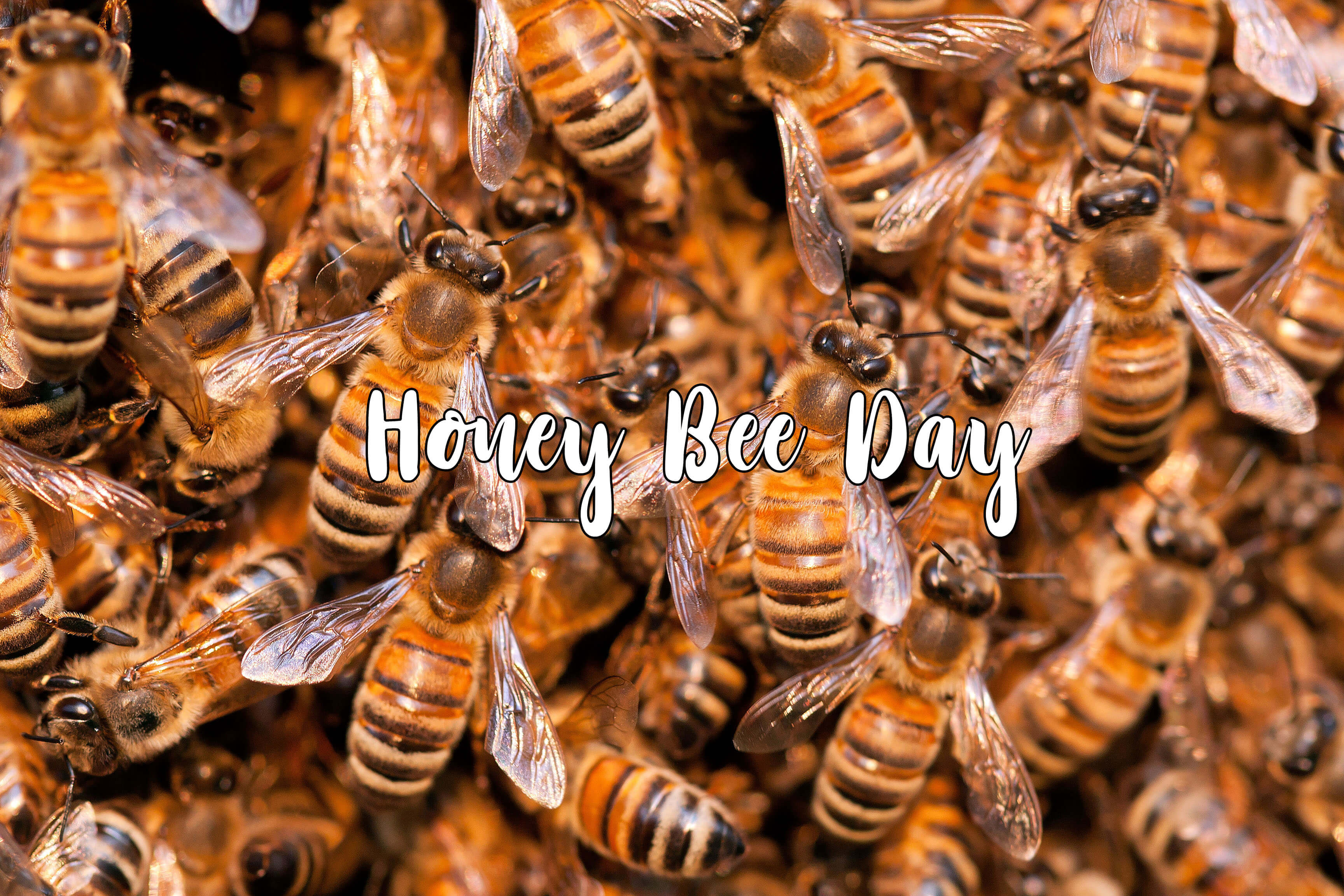 happy honey bee day swarm colony image pc hd wallpaper