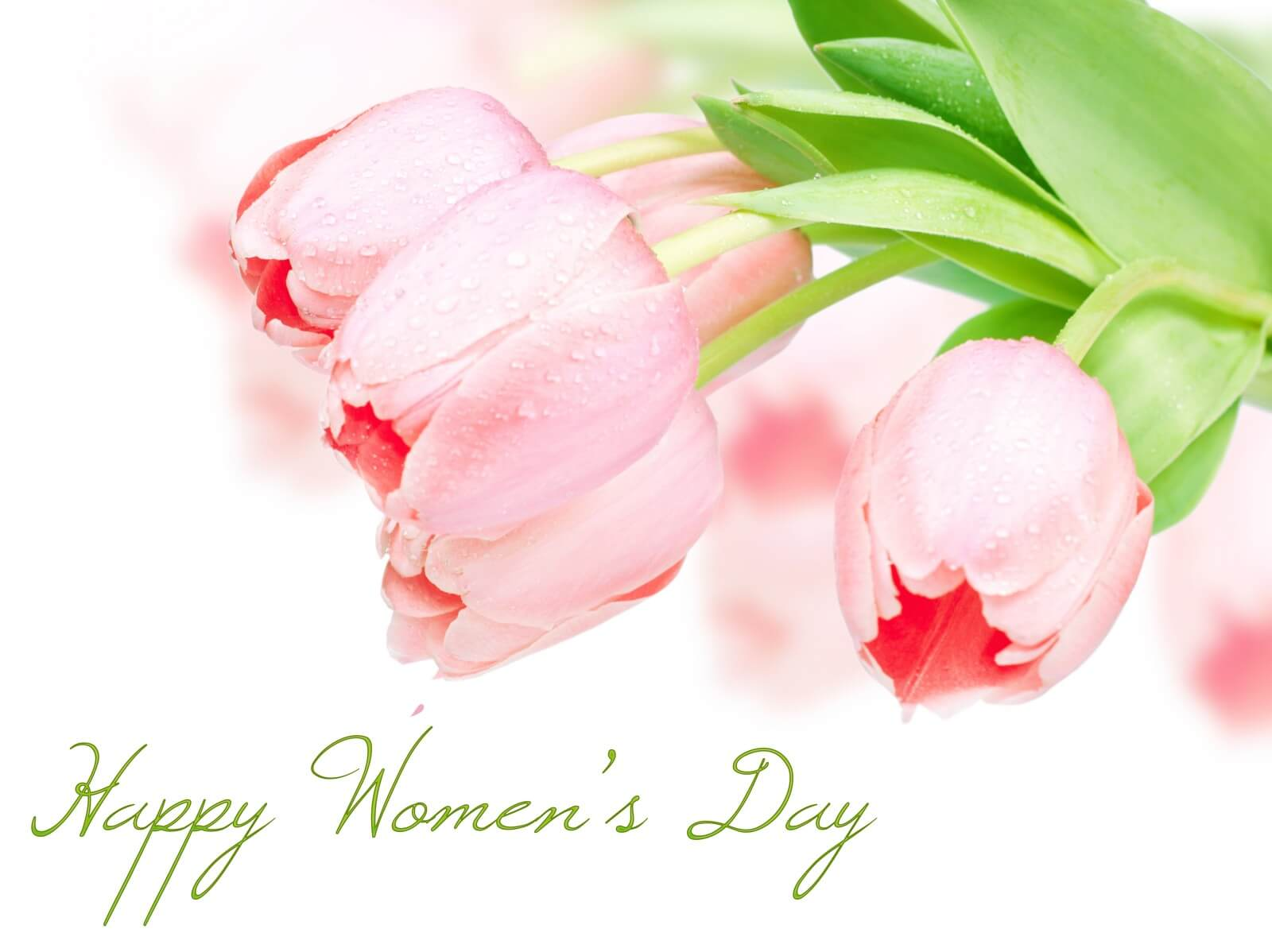 happy international womens day roses wishes hd wallpaper