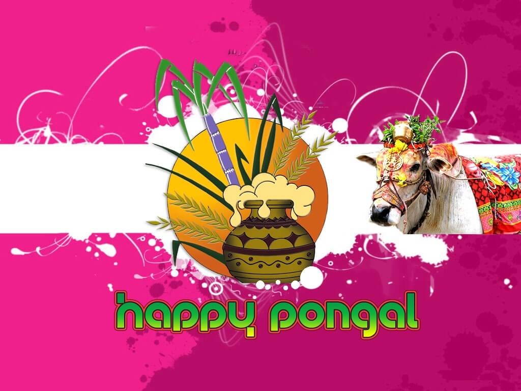 happy mattu pongal background hd wallpaper