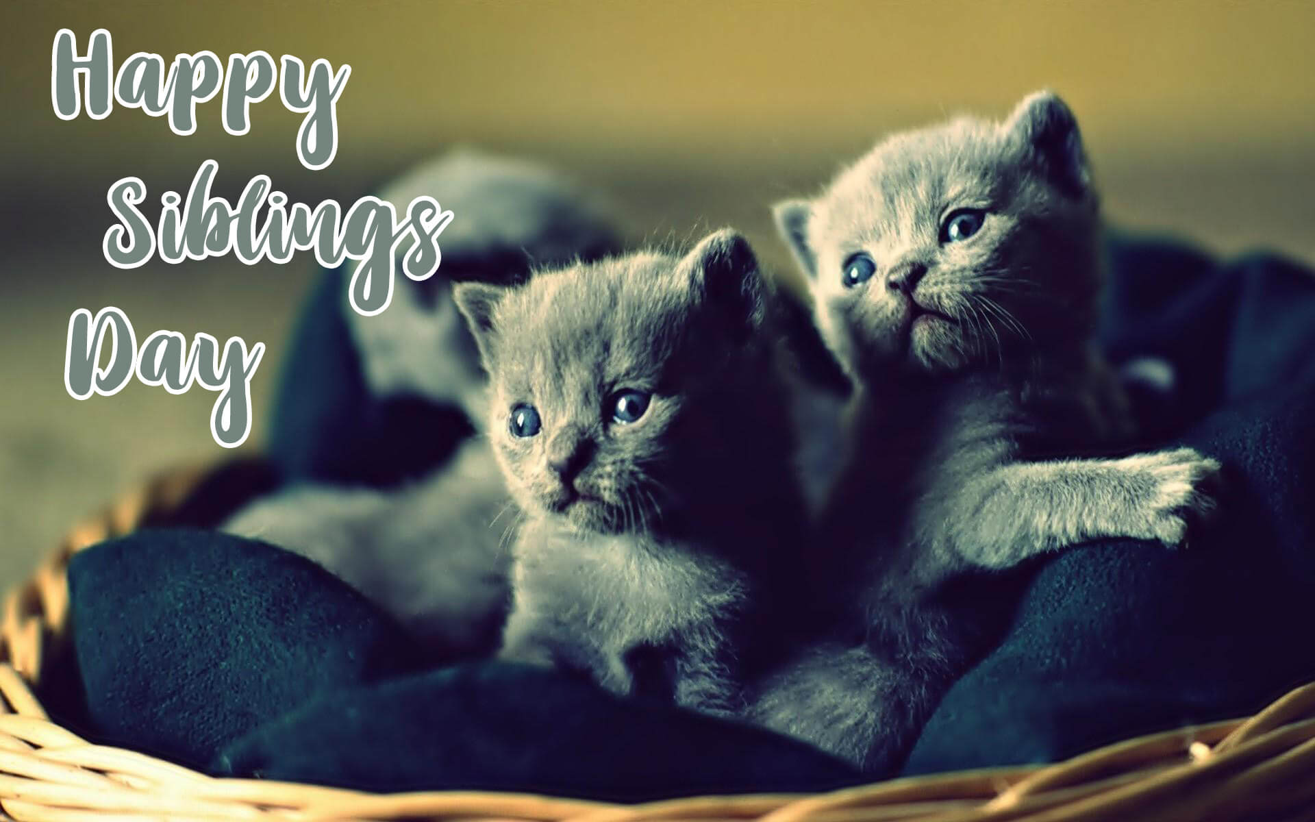 happy national siblings day two kittens cat in basket hd wallpaper