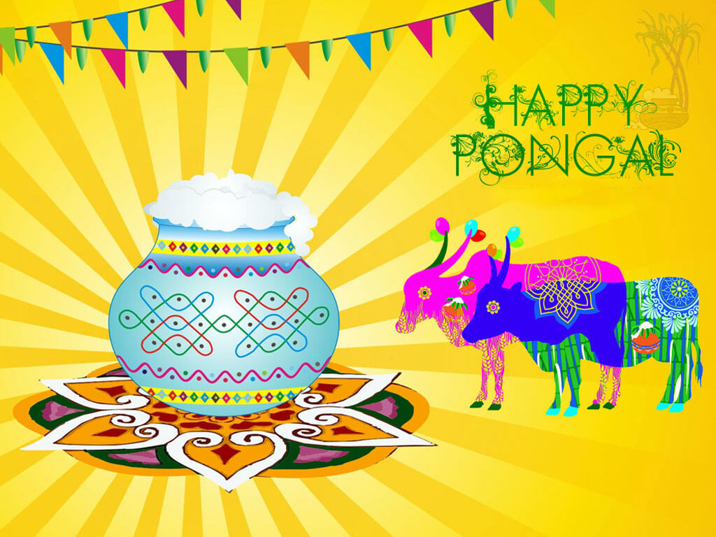 happy pongal wishes background hd wallpaper