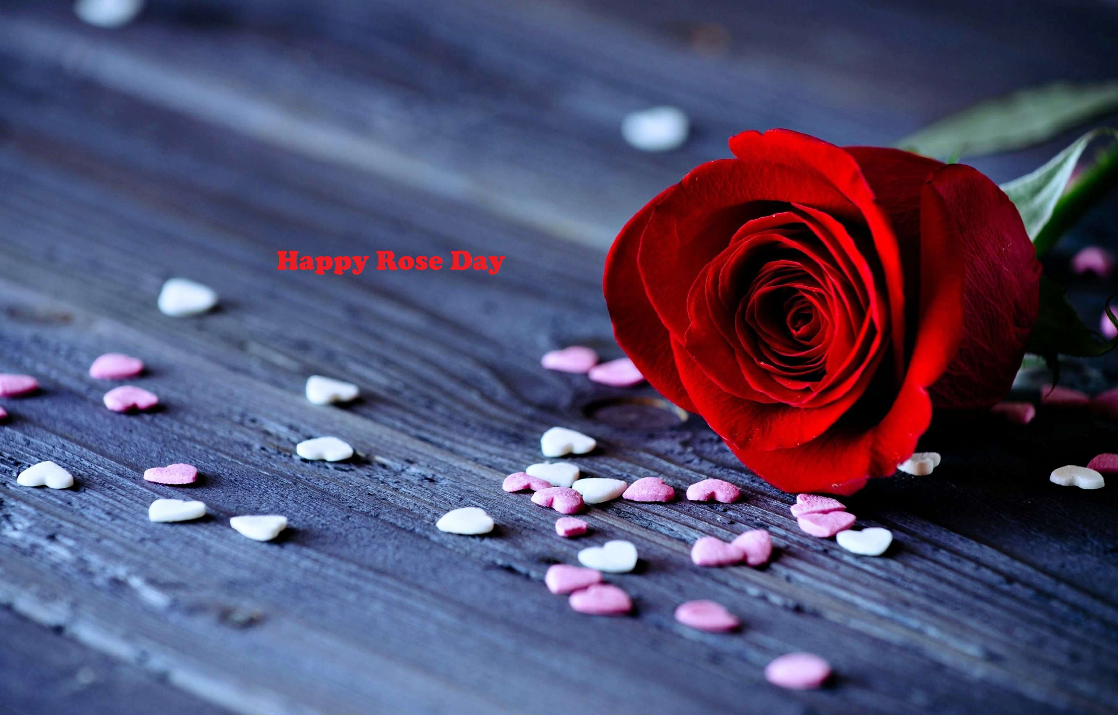 happy rose day red love hearts awesome beautiful image hd wallpaper