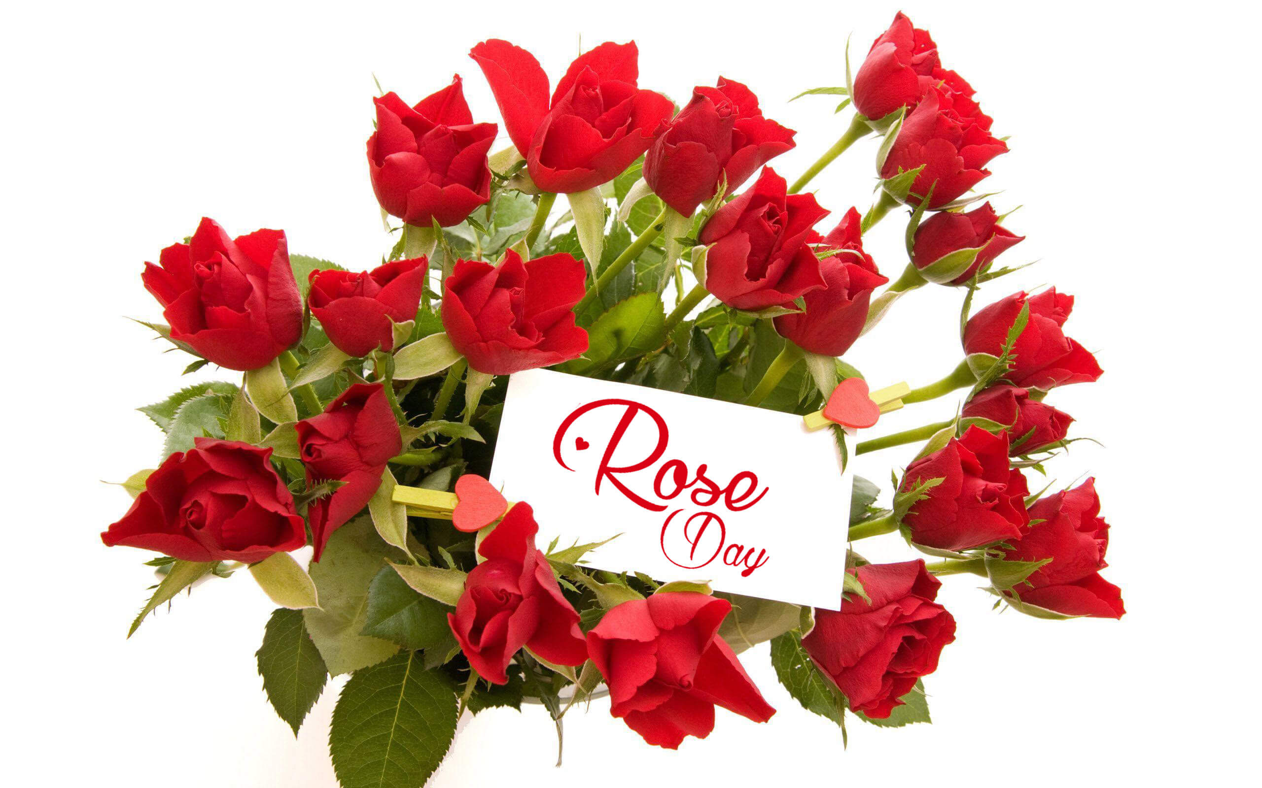 happy rose day red love wishes greetings picture hd wallpaper