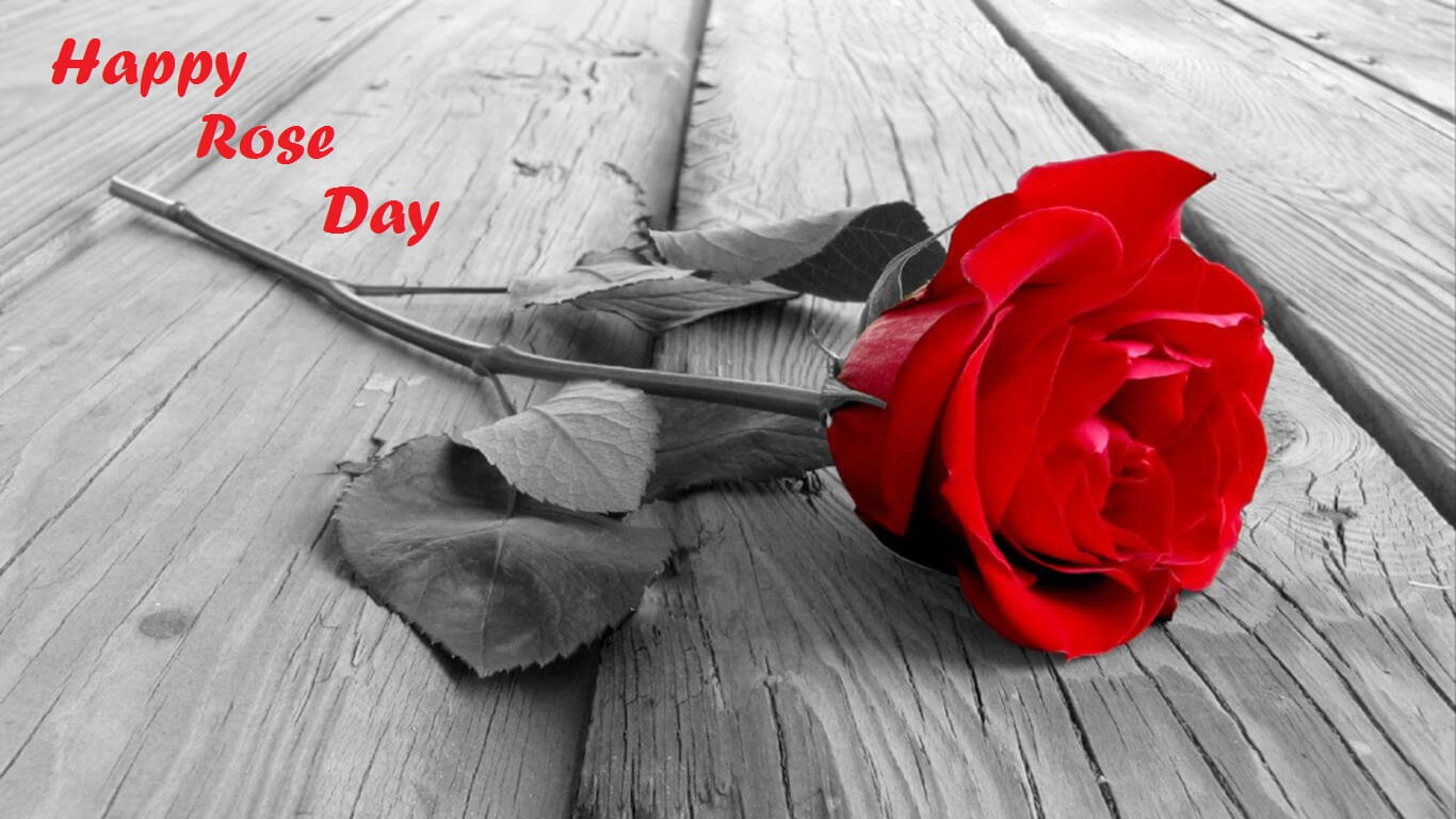 happy rose day wishes black and white background image hd wallpaper
