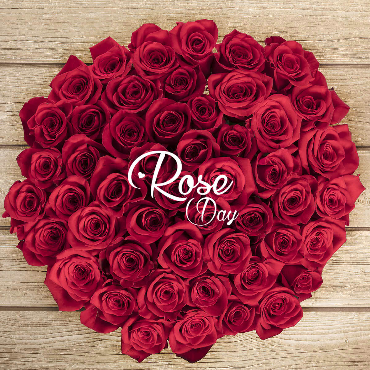 happy rose day wishes bunch valentine image picture hd wallpaper