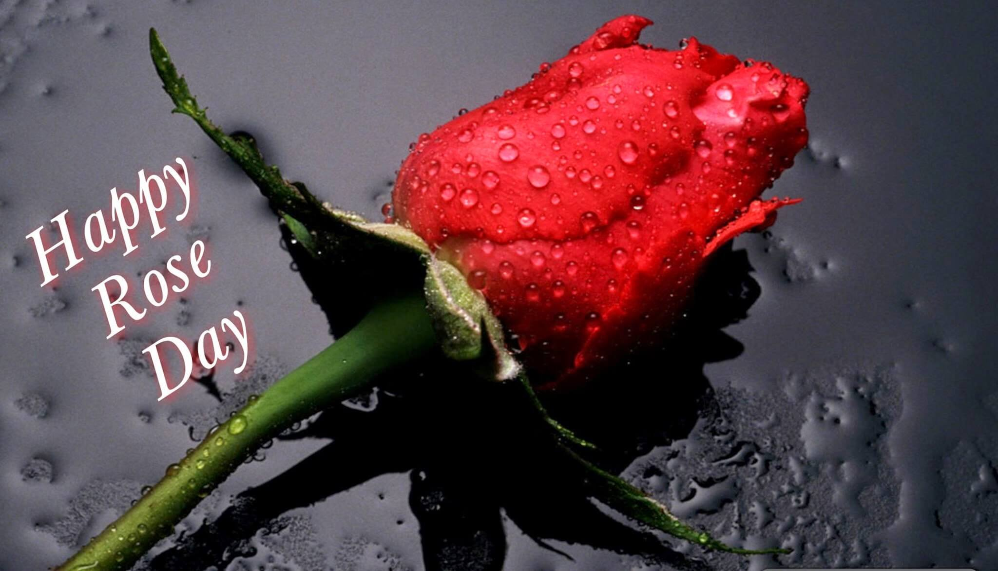 happy rose day wishes greetings image picture background hd wallpaper