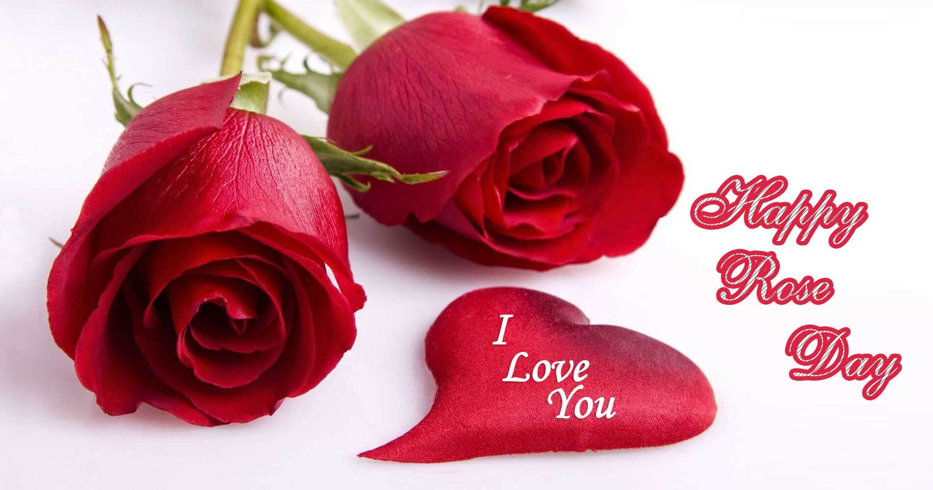 happy rose day wishes valentine i love you image picture hd wallpaper
