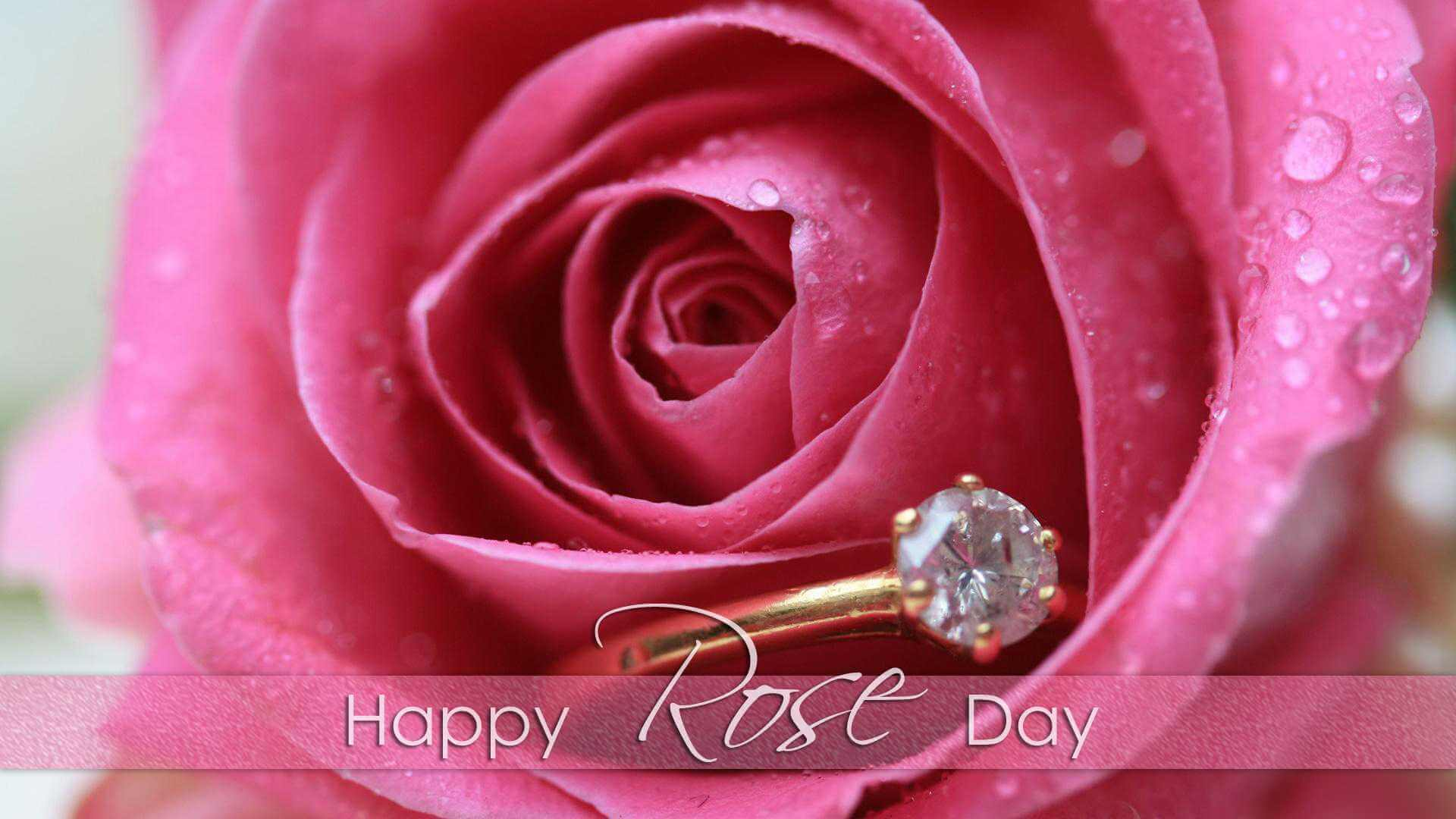 happy rose day wishes water droplets on petals image hd wallpaper