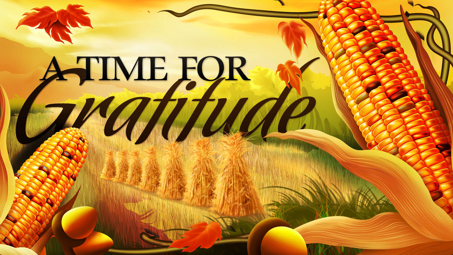 happy thanksgiving day gratitude food corn latest hd wallpaper