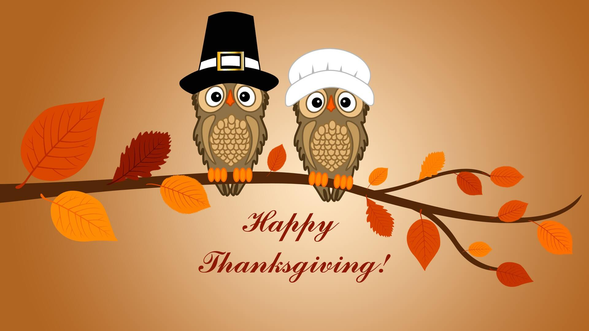 happy thanksgiving day owls sitting latest hd wallpaper
