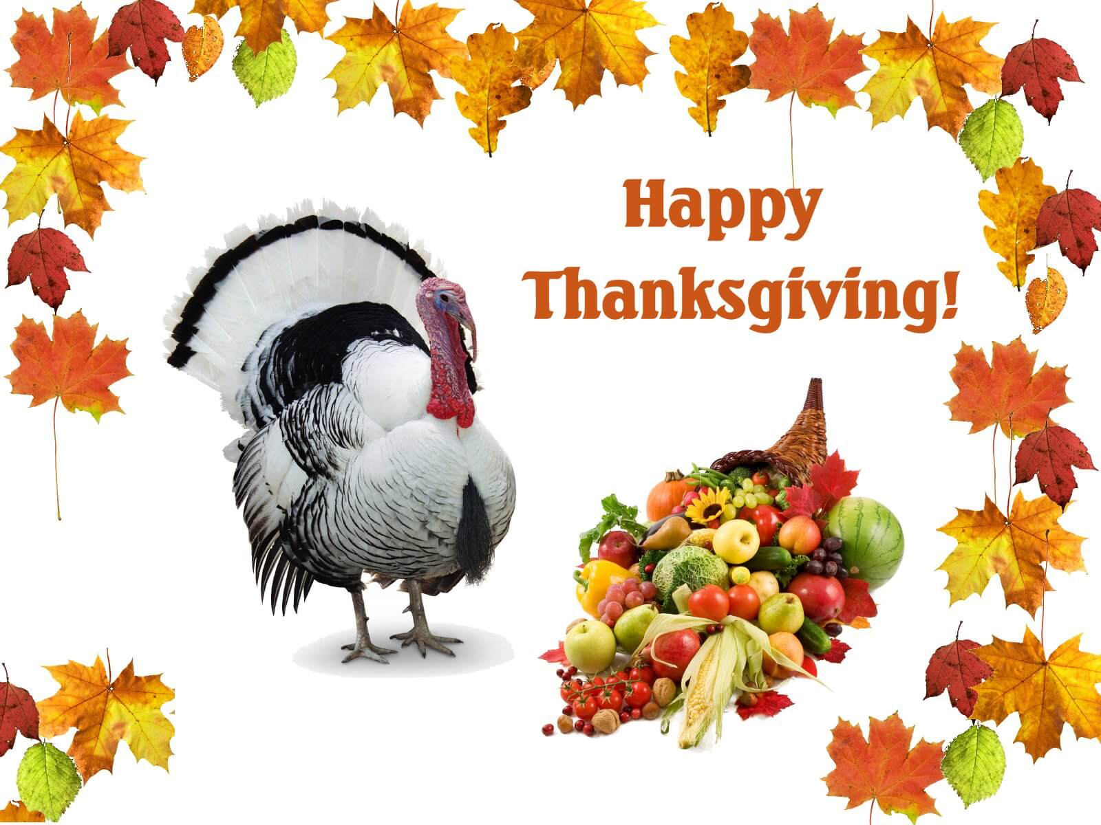 happy thanksgiving day turkey desktop wallpaper