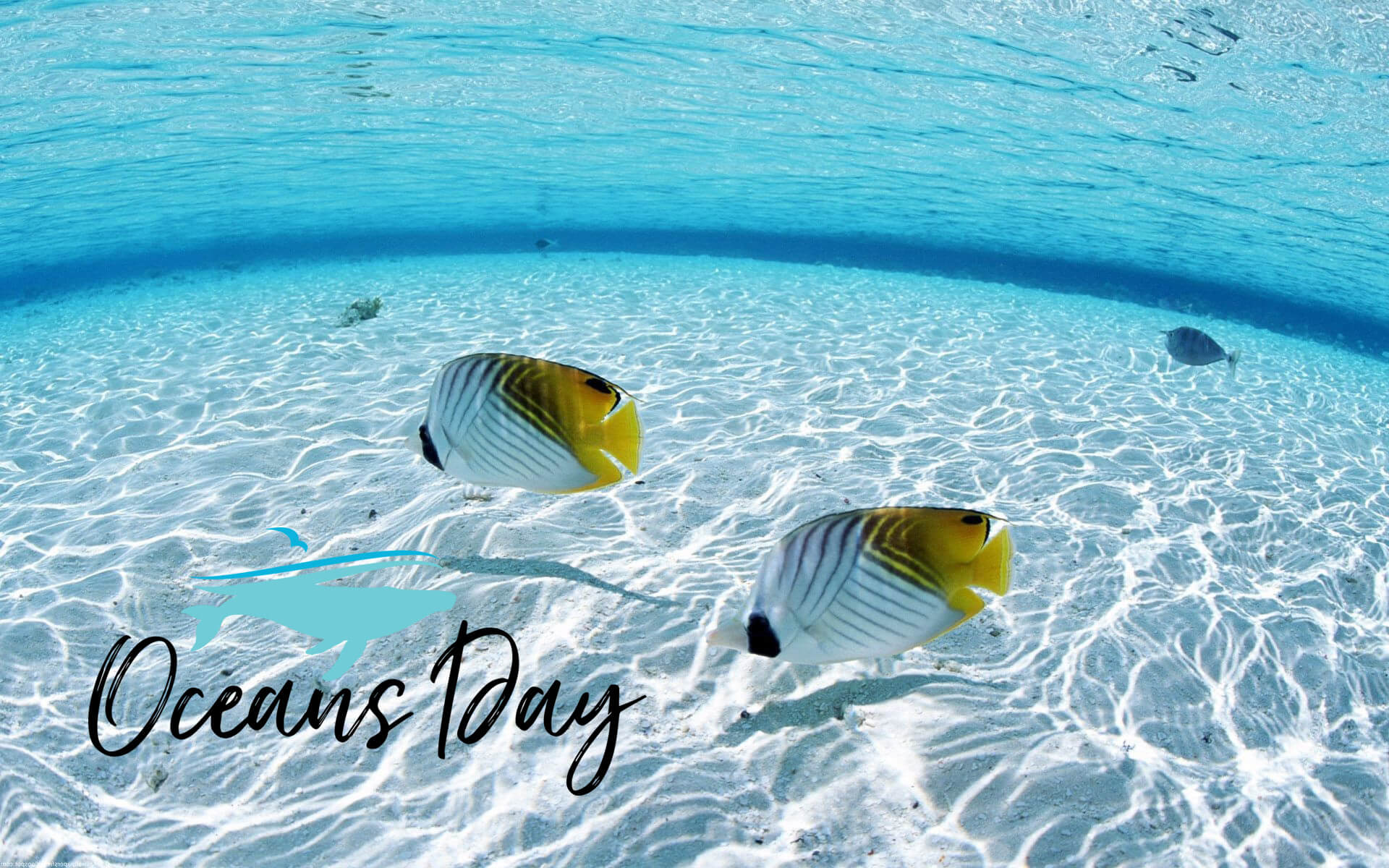 happy world oceans day fish seascapes hd wallpaper