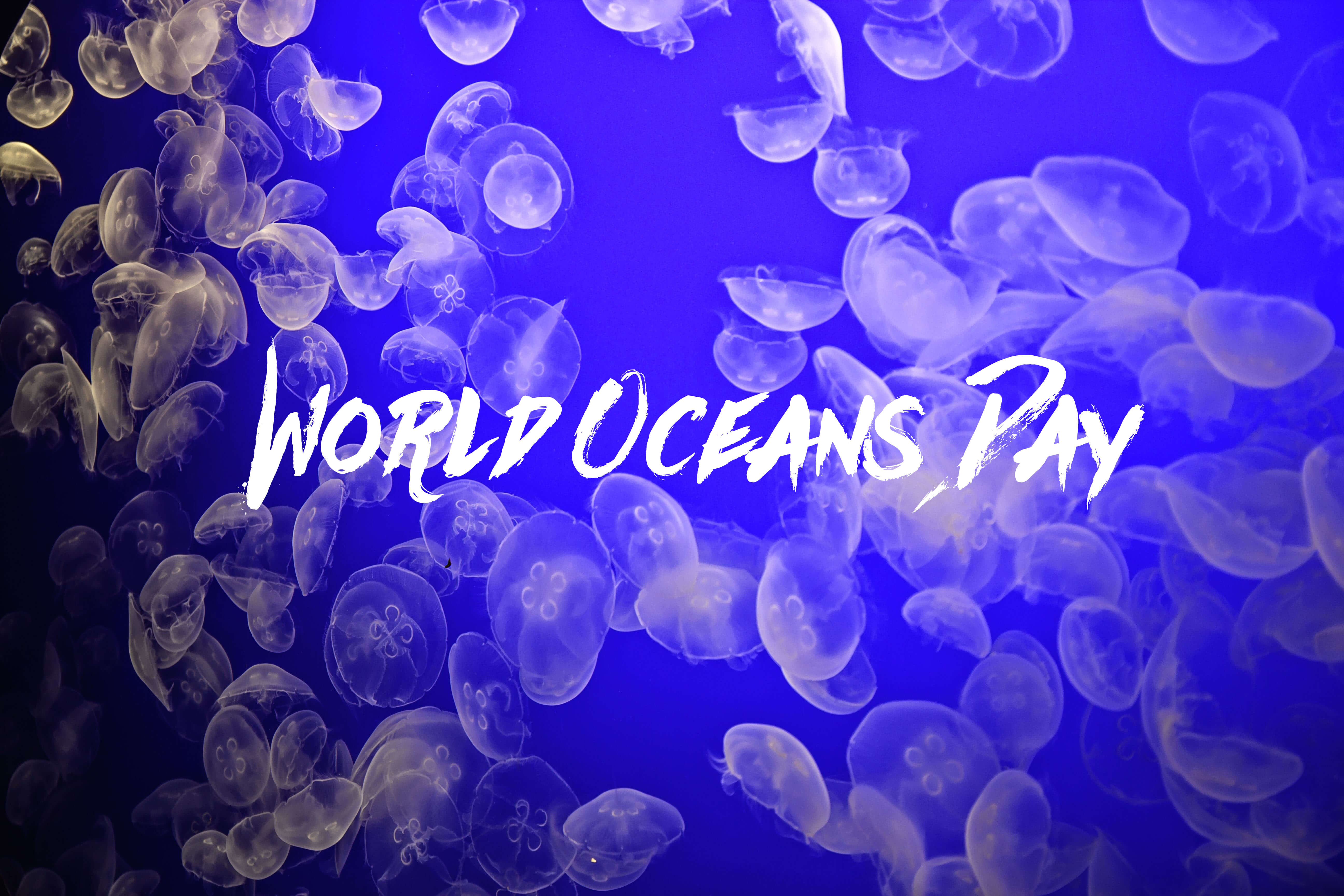 happy world oceans day moon jelly fish hd wallpaper