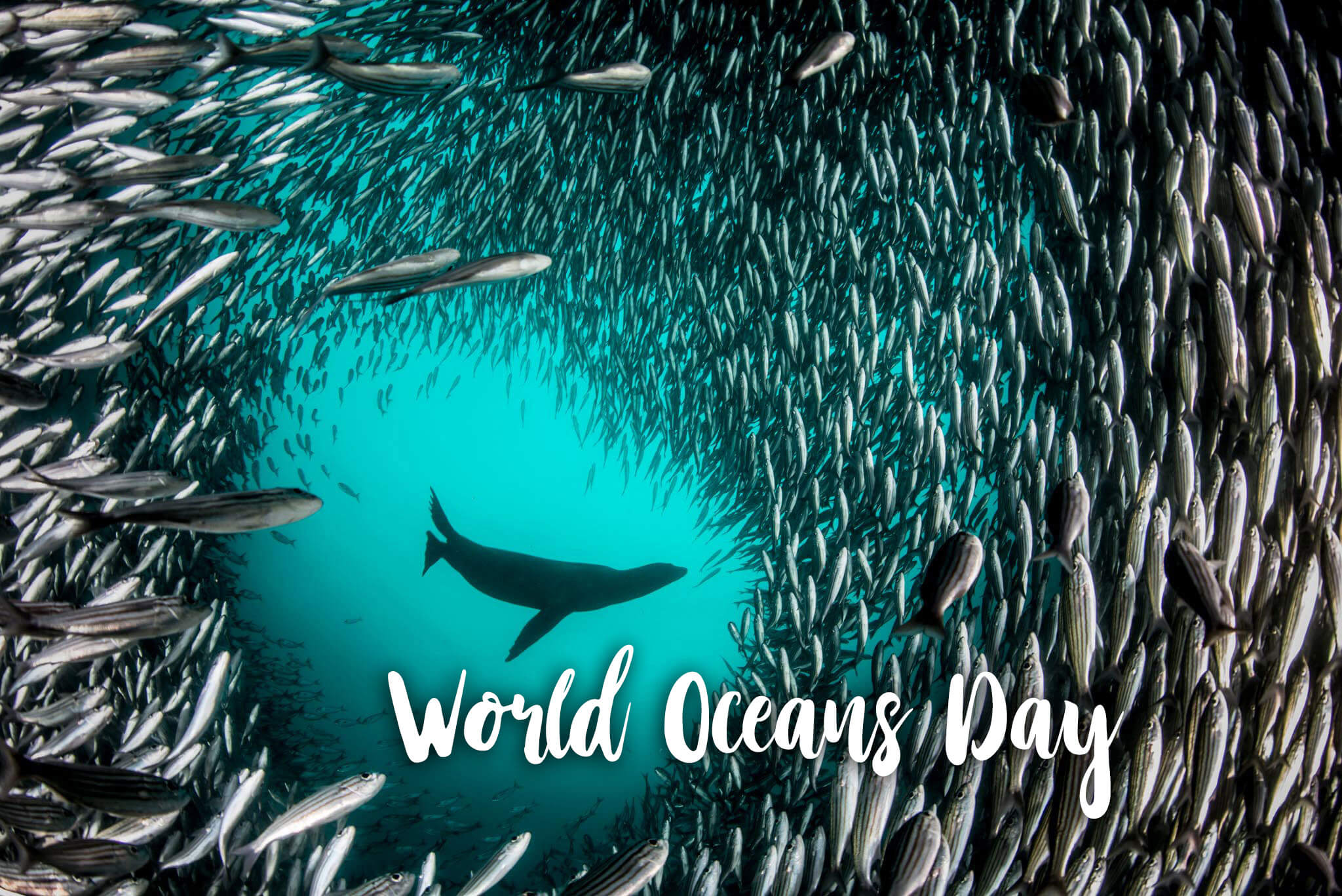 happy world oceans day pristine sea fishes wallpaper
