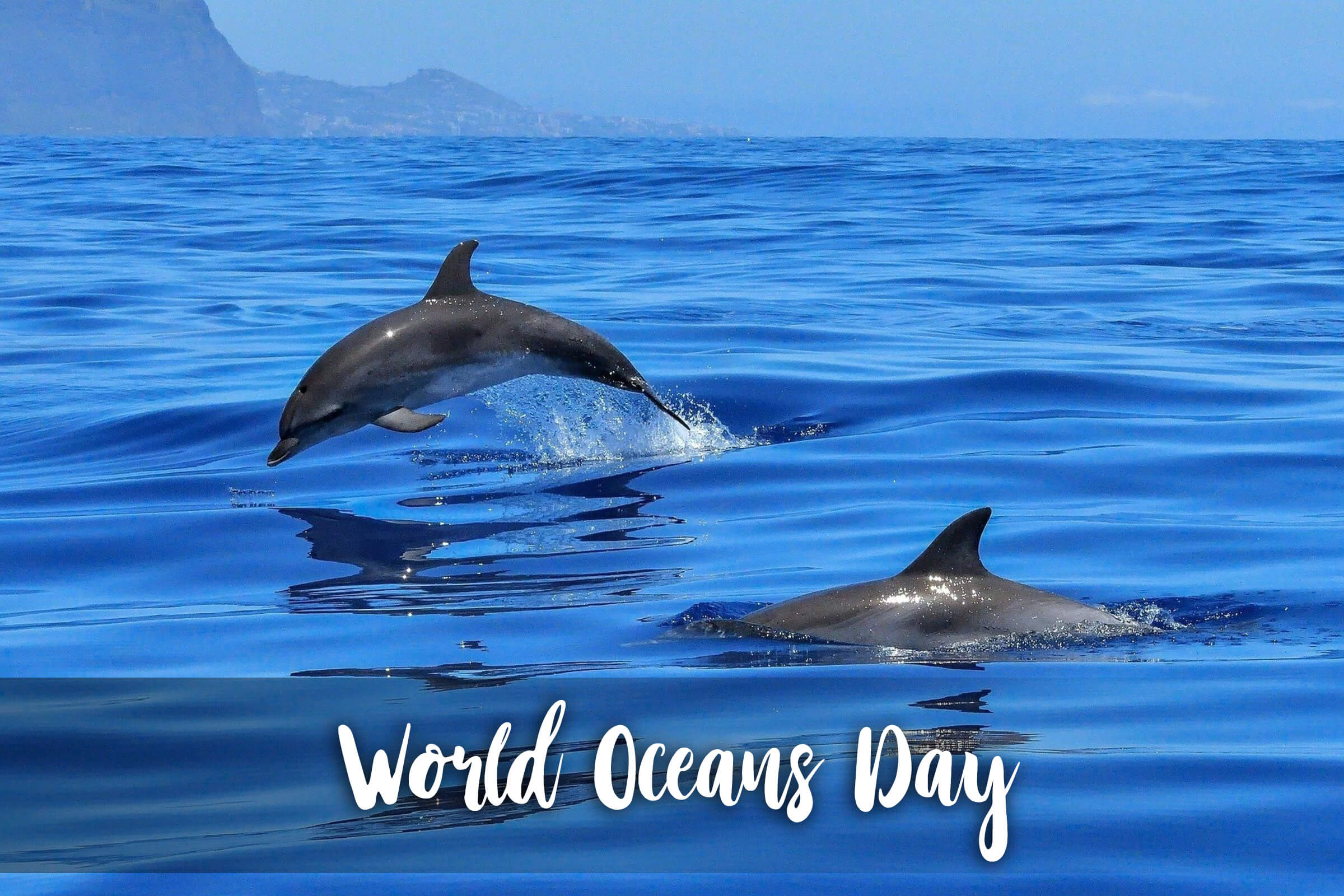 happy world oceans day save dolphins hd wallpaper