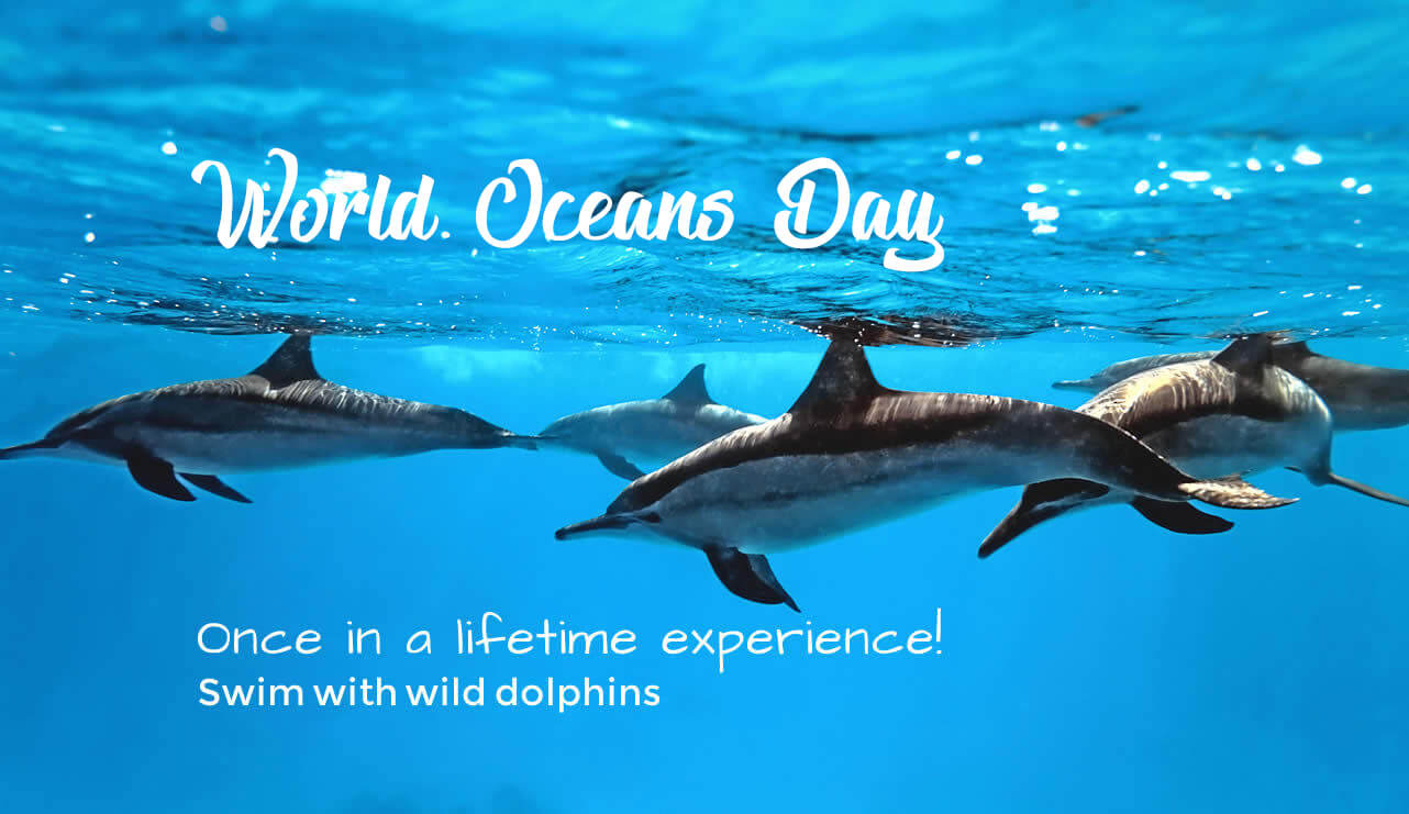 happy world oceans day save dolphins save ocean