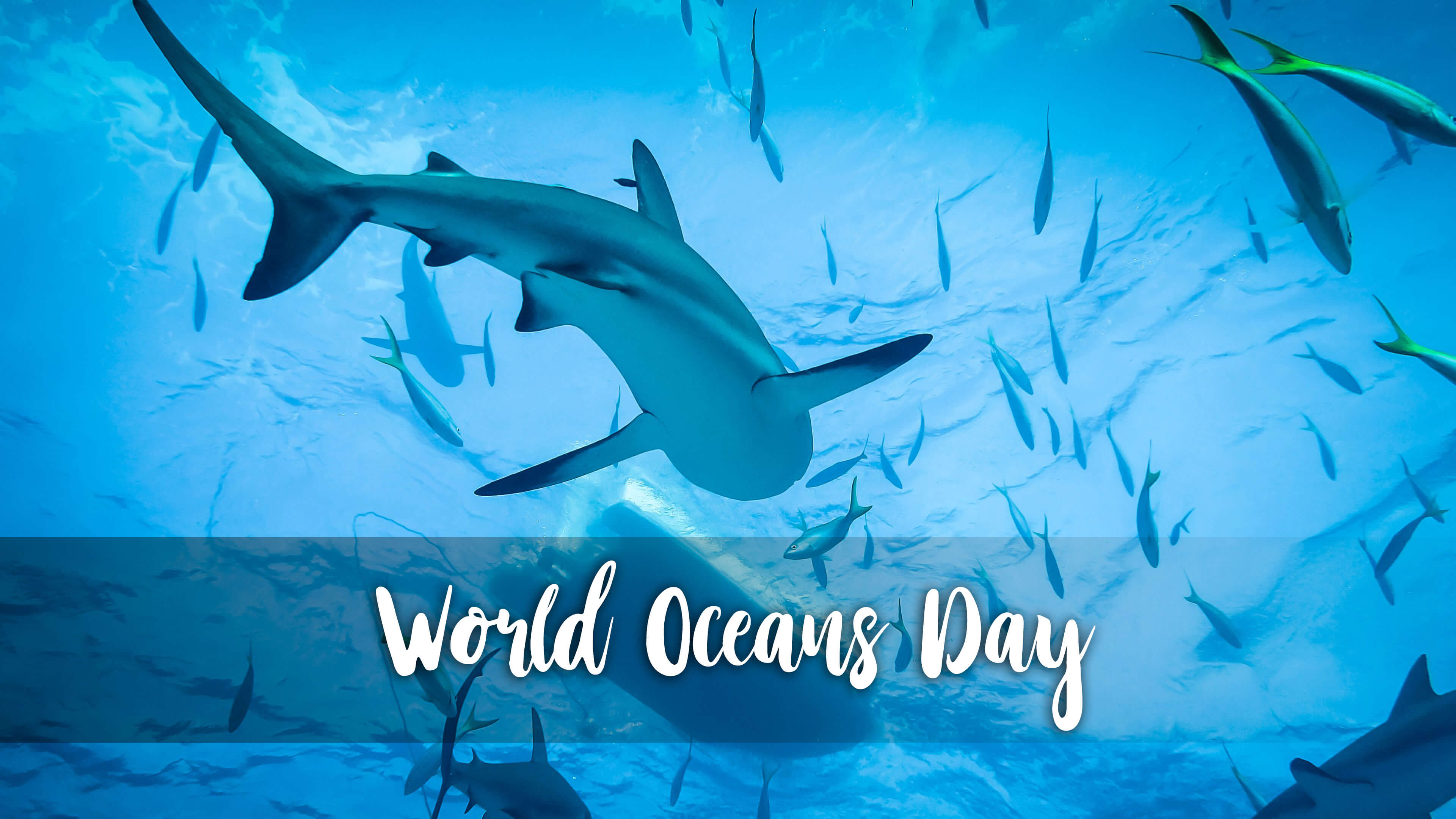 happy world oceans day swimming with sharks