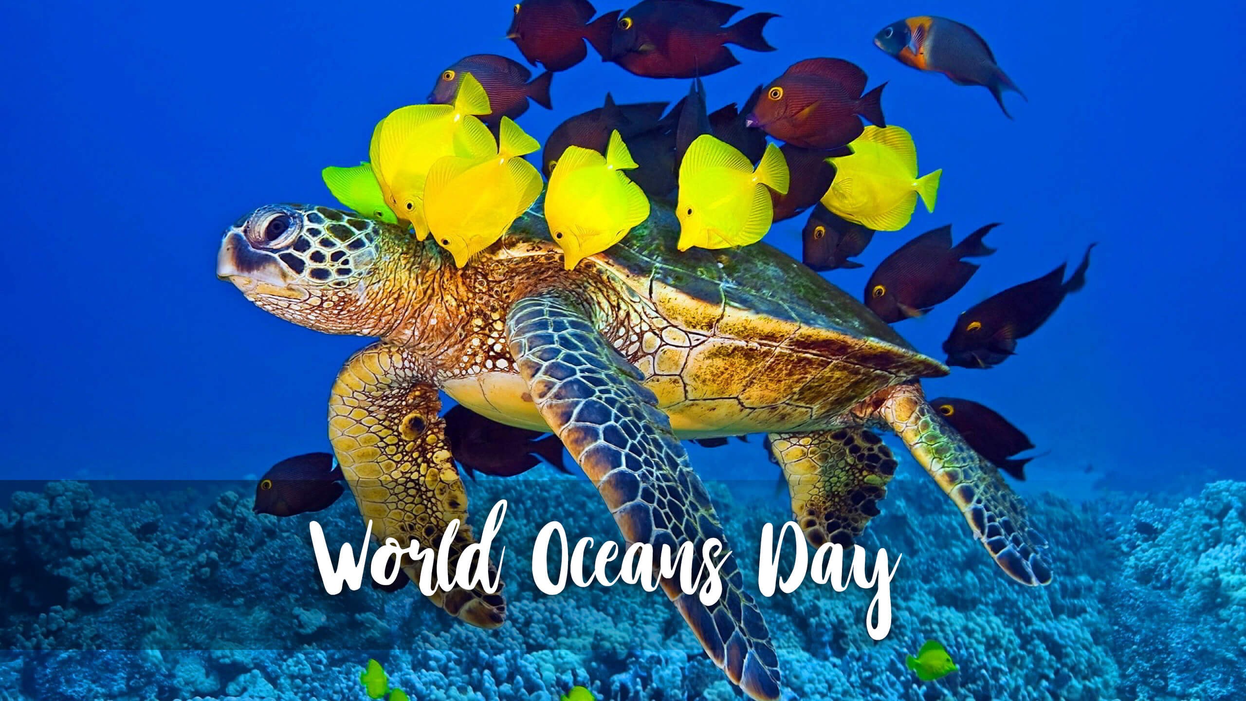happy world oceans day turtle color fishes hd wallpaper