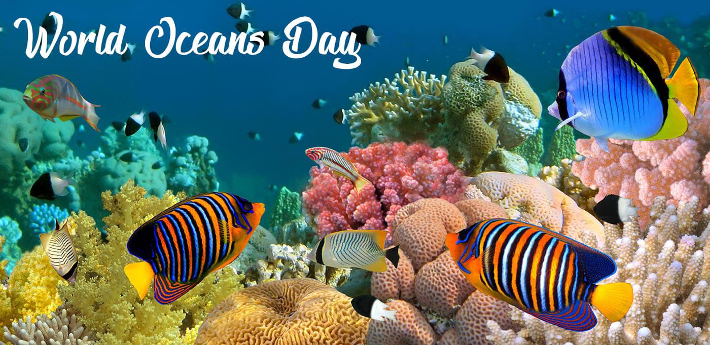 happy world oceans day underwater aquarium hd wallpaper