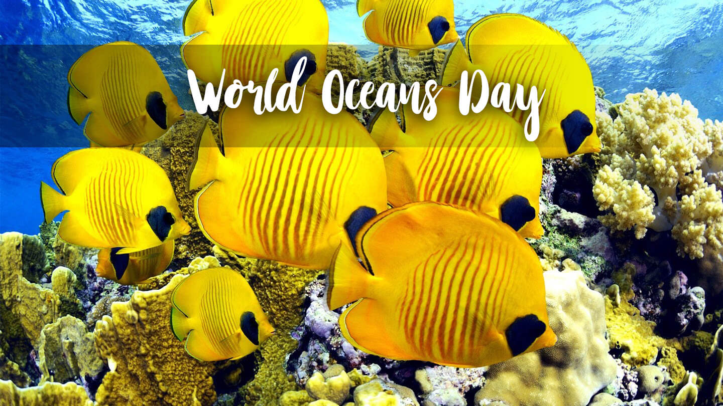 happy world oceans day underwater yellow fish hd wallpaper