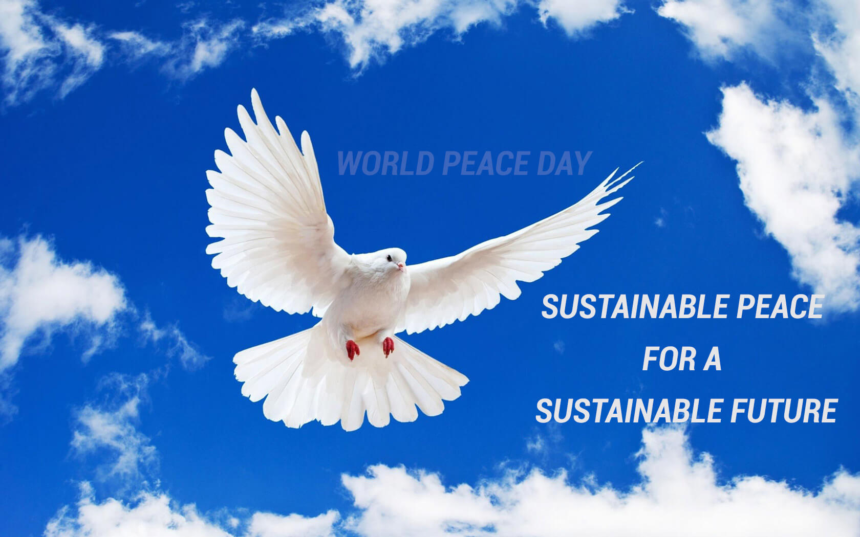 international world peace day dove hd wallpaper