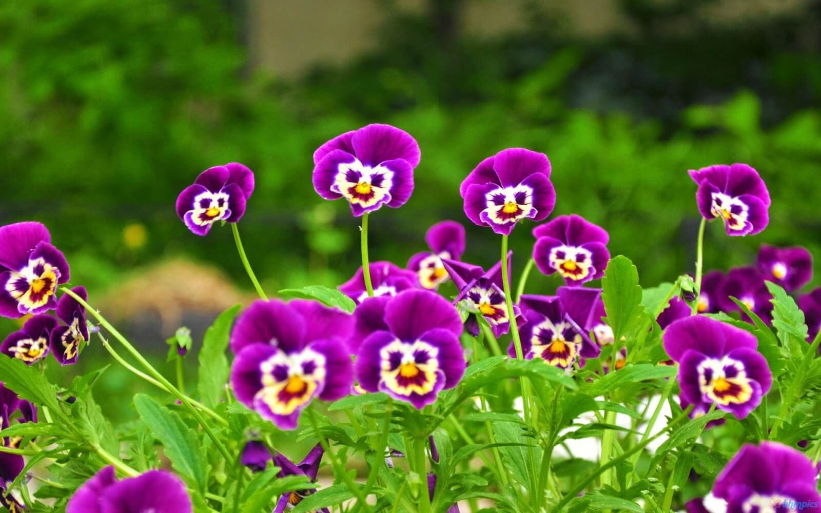 New Funny Flowers Happy Family Day Wallpaper