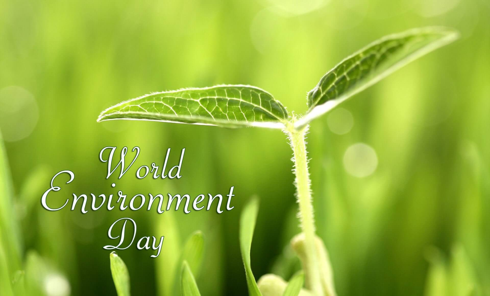 world environment day protect plants trees hd