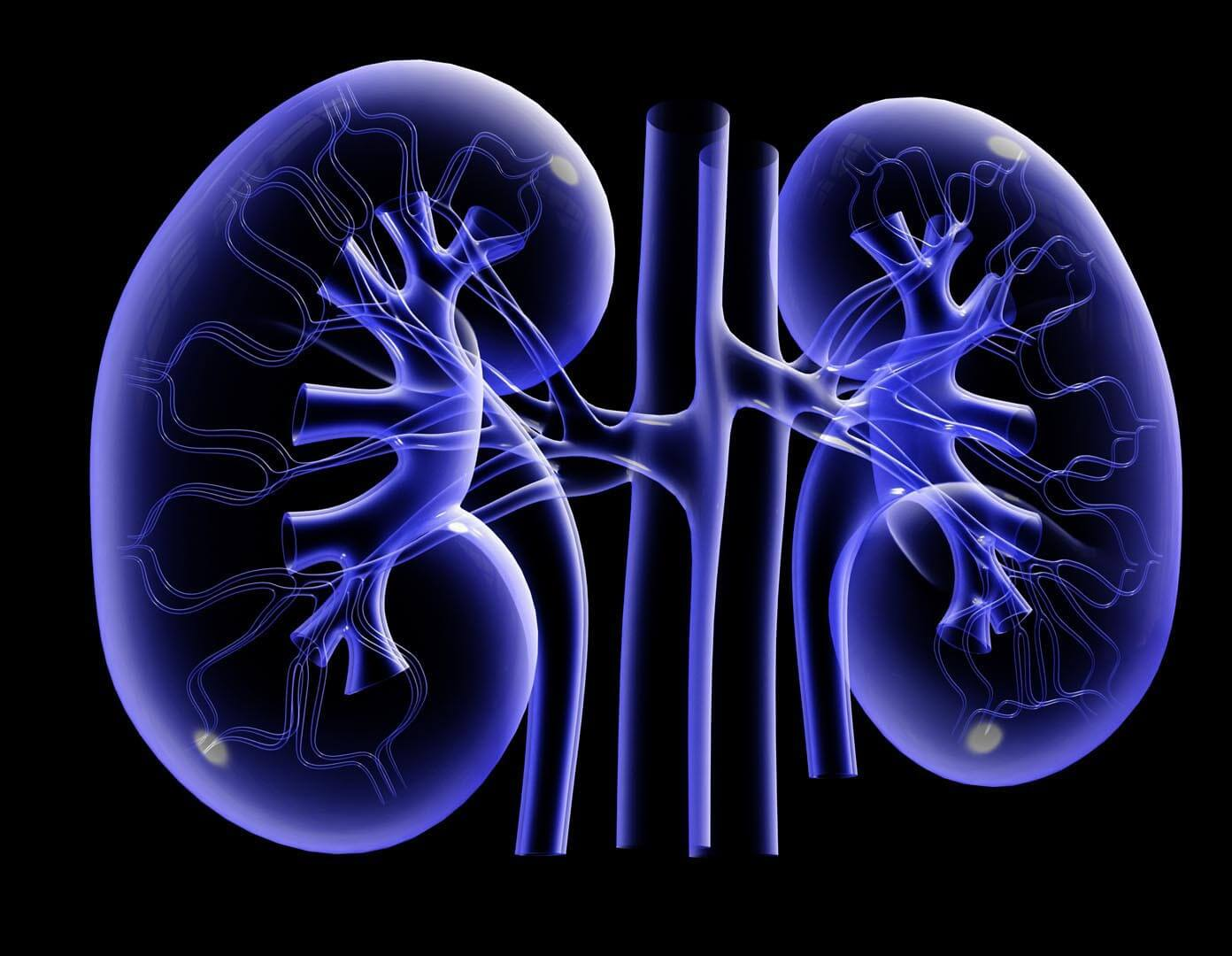 World Kidney Day Categories Acute Renal Failure Function